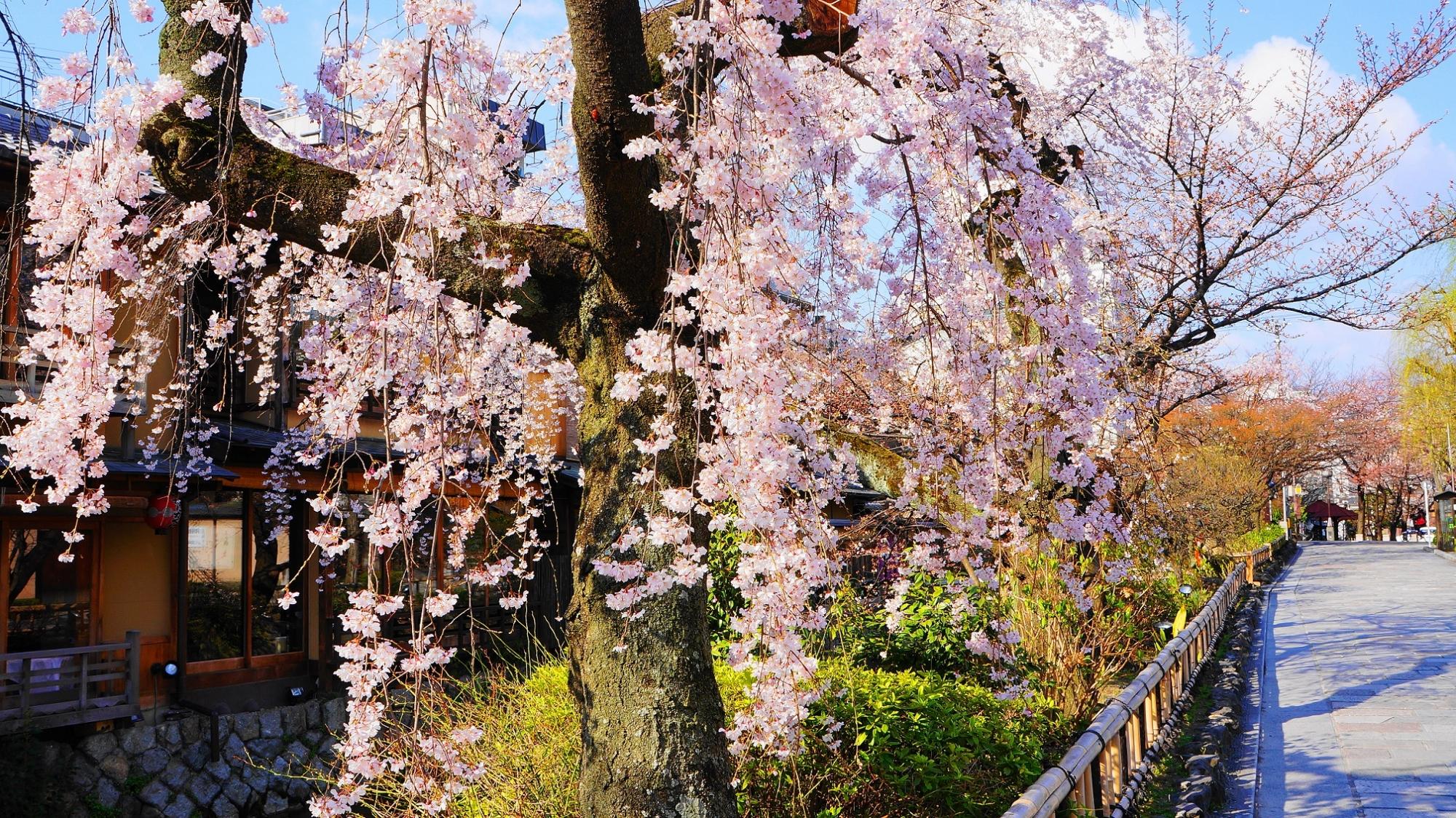 華やかな桜を演出する石畳の通り