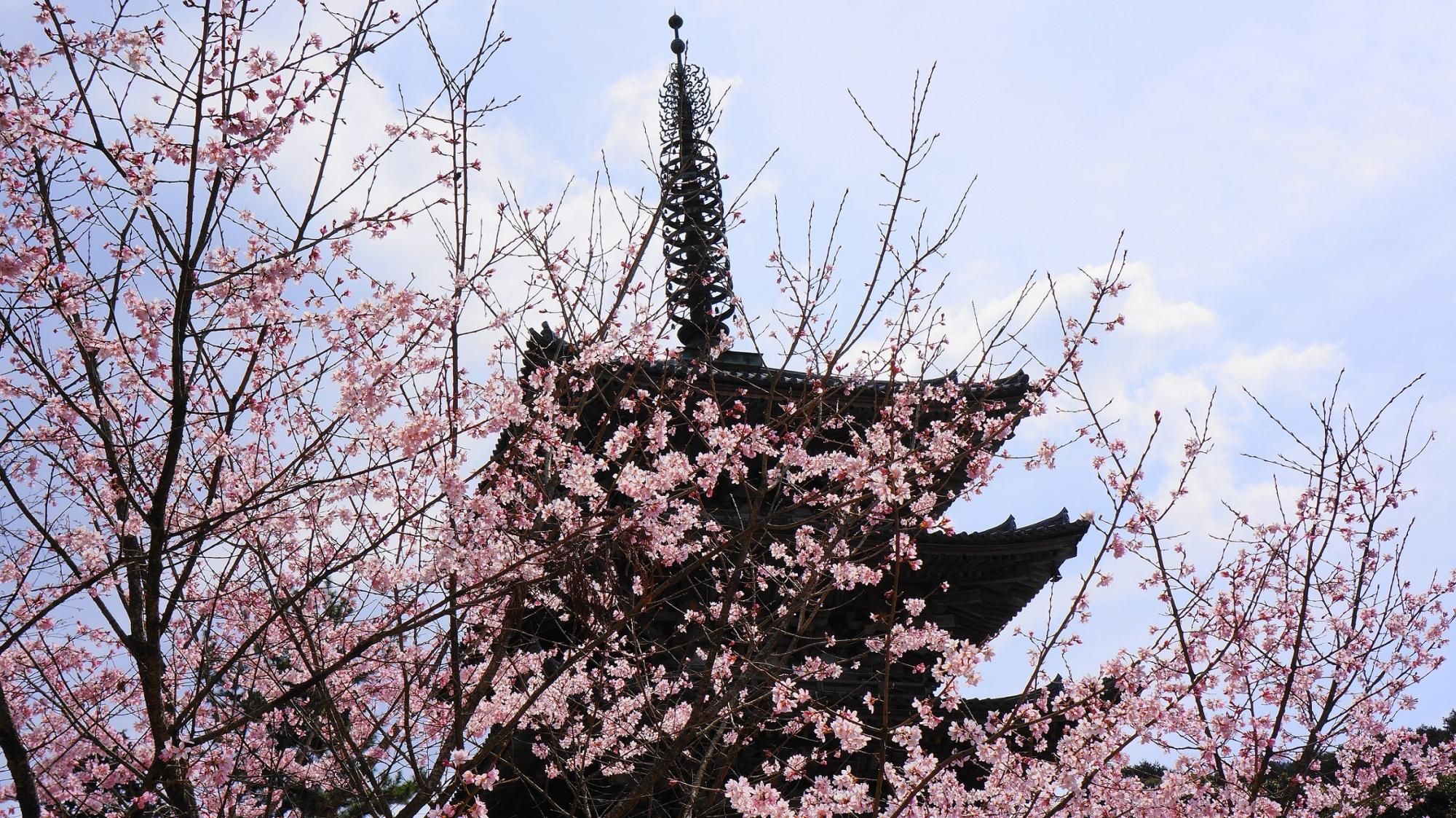 世界遺産の醍醐寺の五重塔と華やかな桜