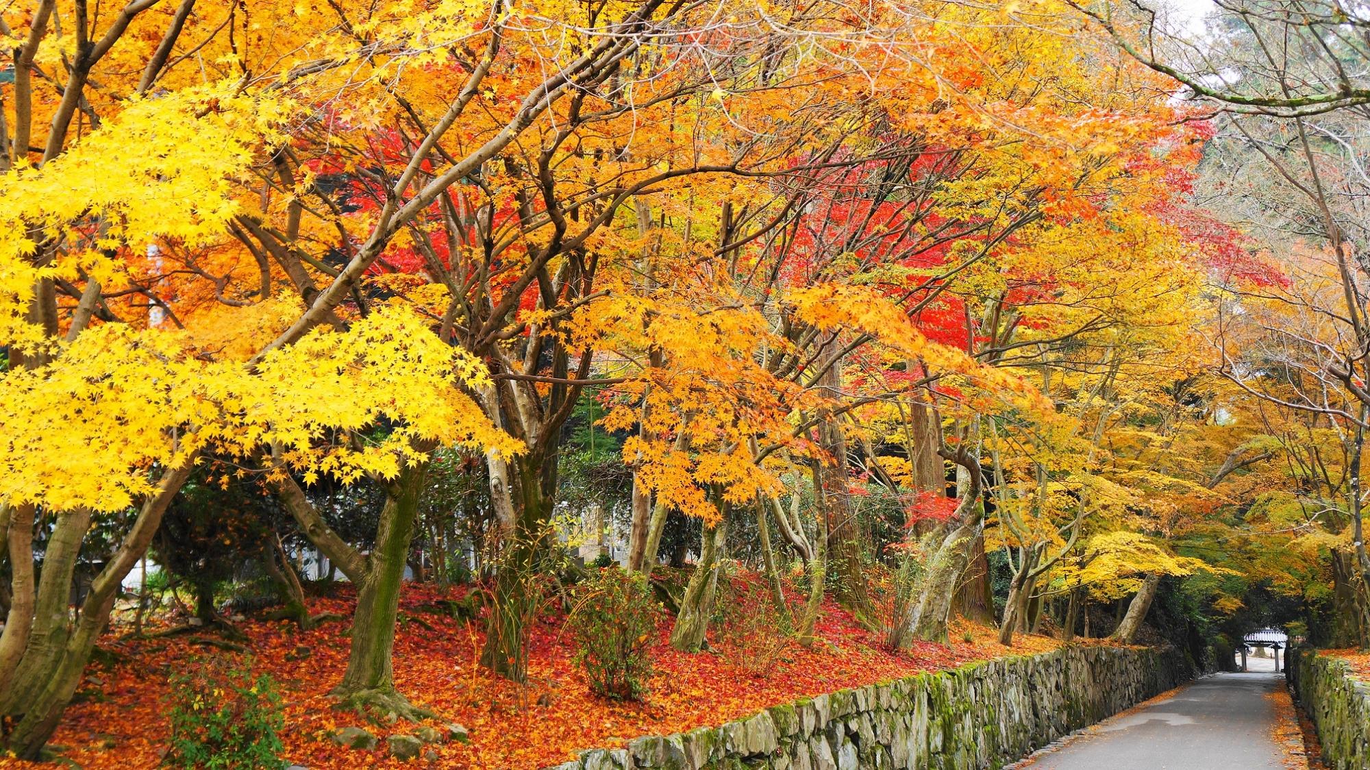 琴坂を染める多彩な秋色の紅葉や散りもみじ