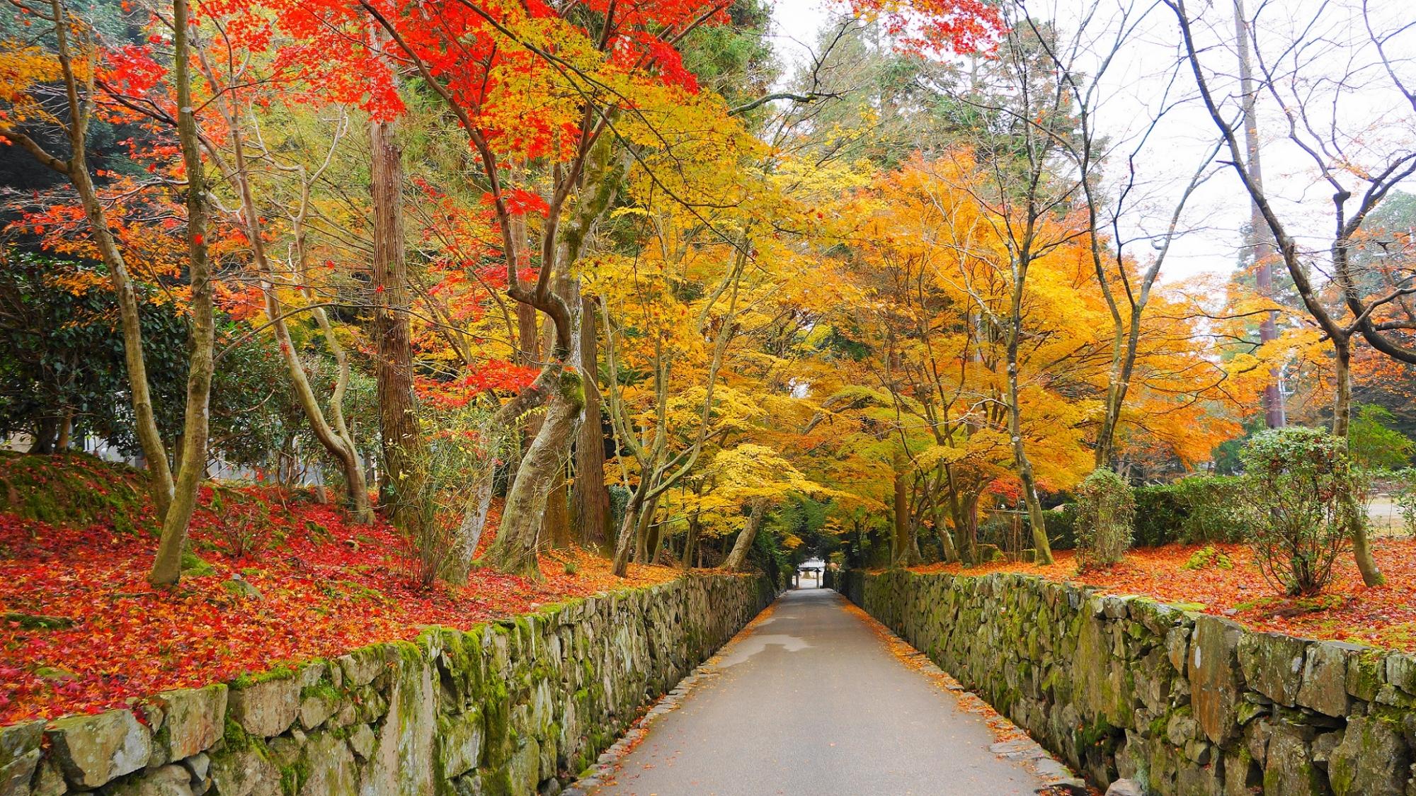 琴坂の紅葉や散りもみじ