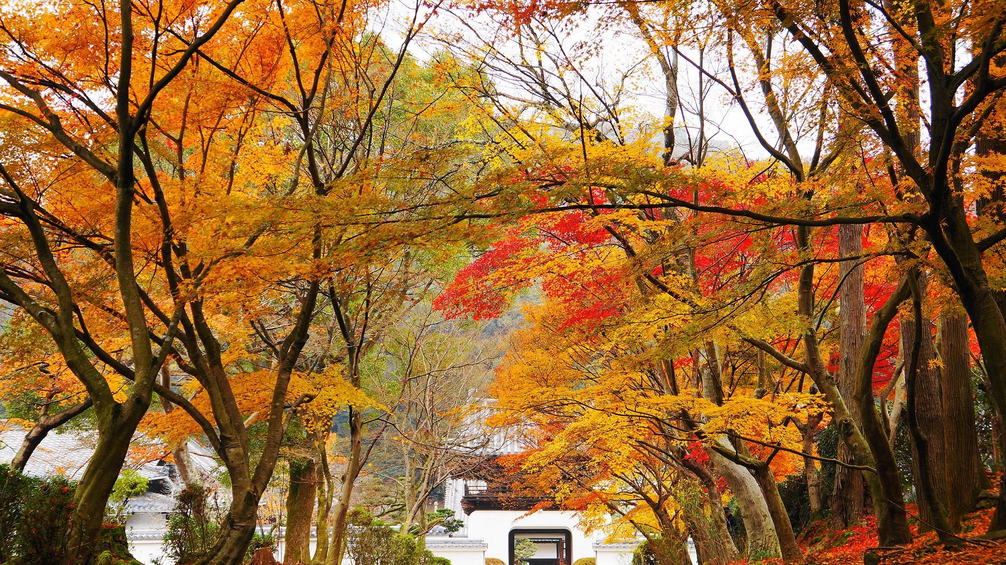 興聖寺の龍宮門に降り注ぐ色とりどりの紅葉