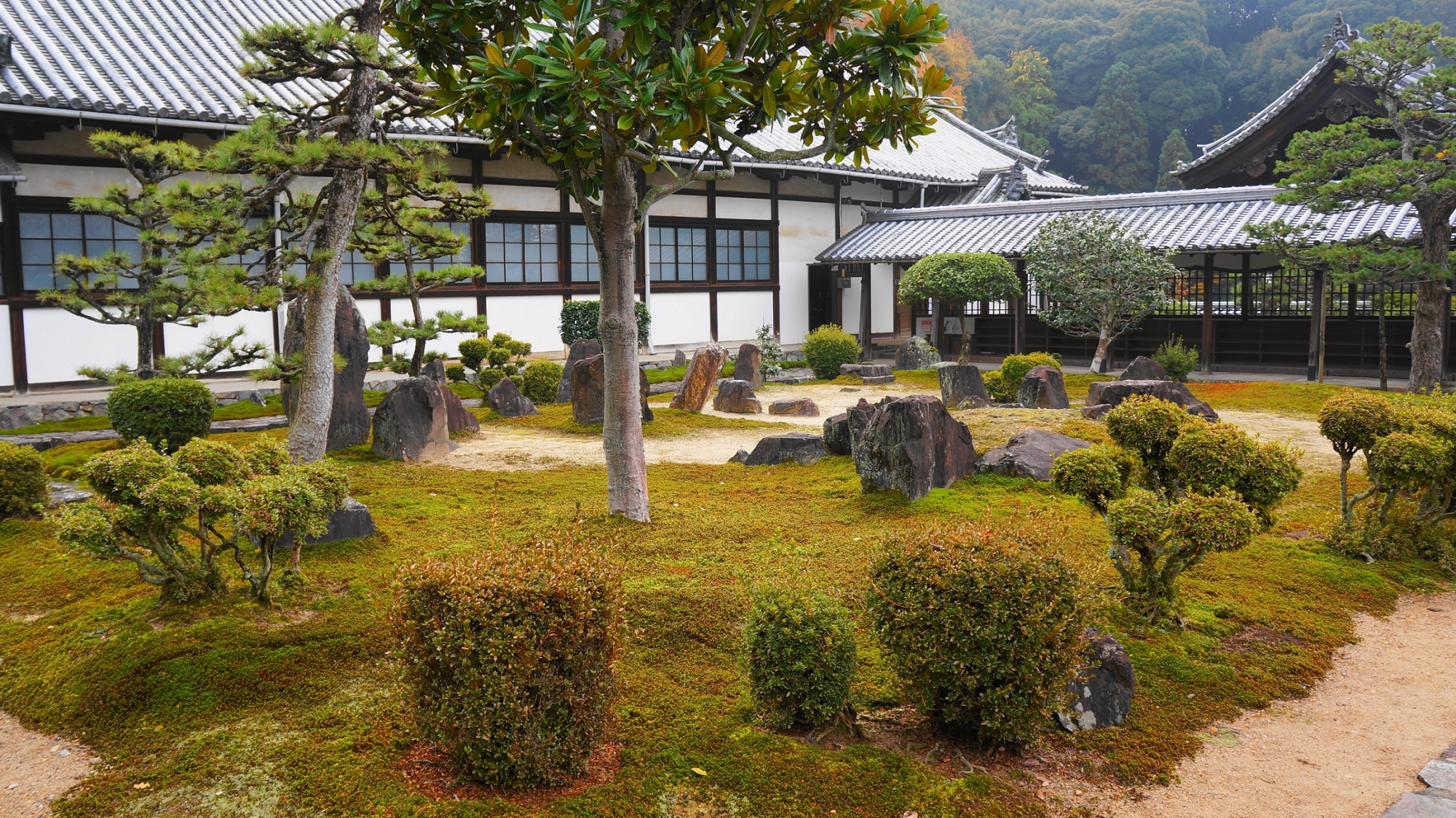 苔に岩や刈り込みが配された落ち着いた雰囲気の興聖寺の境内