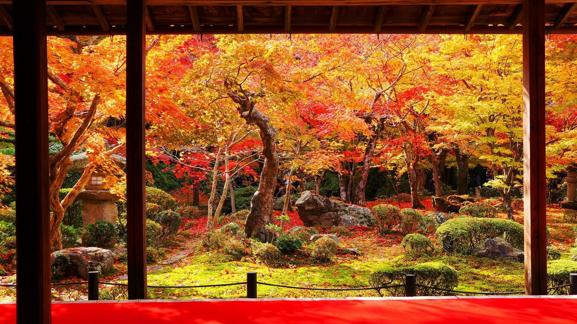 圓光寺の十牛之庭の優美な見ごろの紅葉