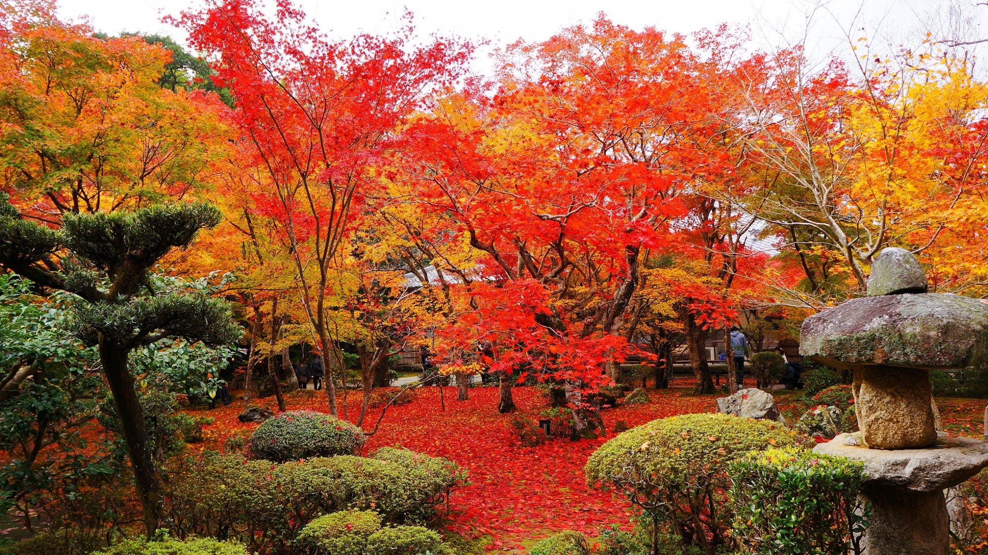 圓光寺 十牛之庭 見ごろの紅葉 2012年11月