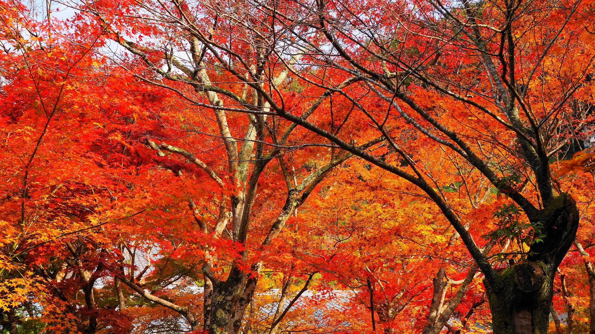 圓光寺の十牛之庭の見ごろの美しい紅葉