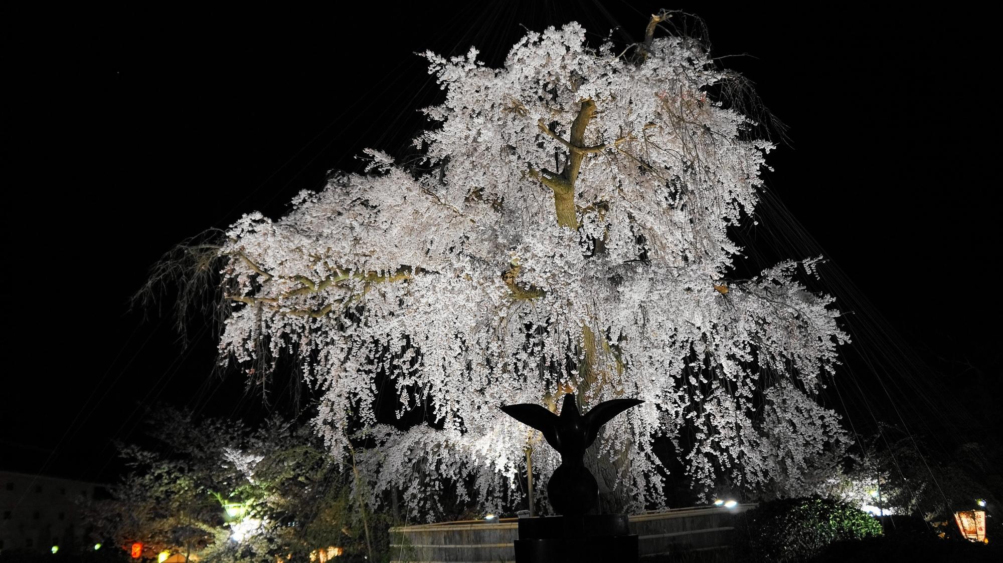 円山公園の祇園しだれ桜ライトアップ