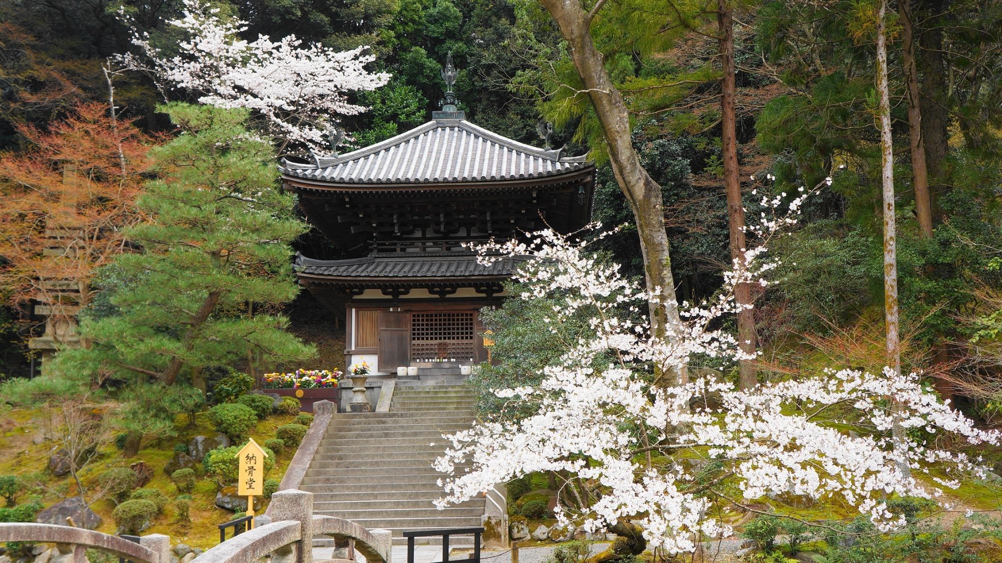 知恩院の納骨堂と桜