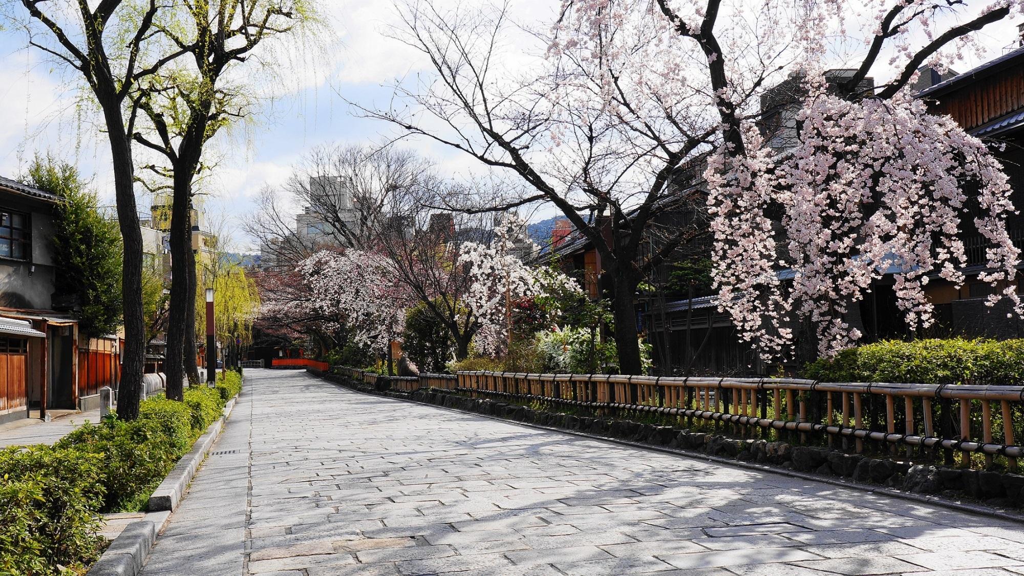 ガラスに映る桜と春色の石畳