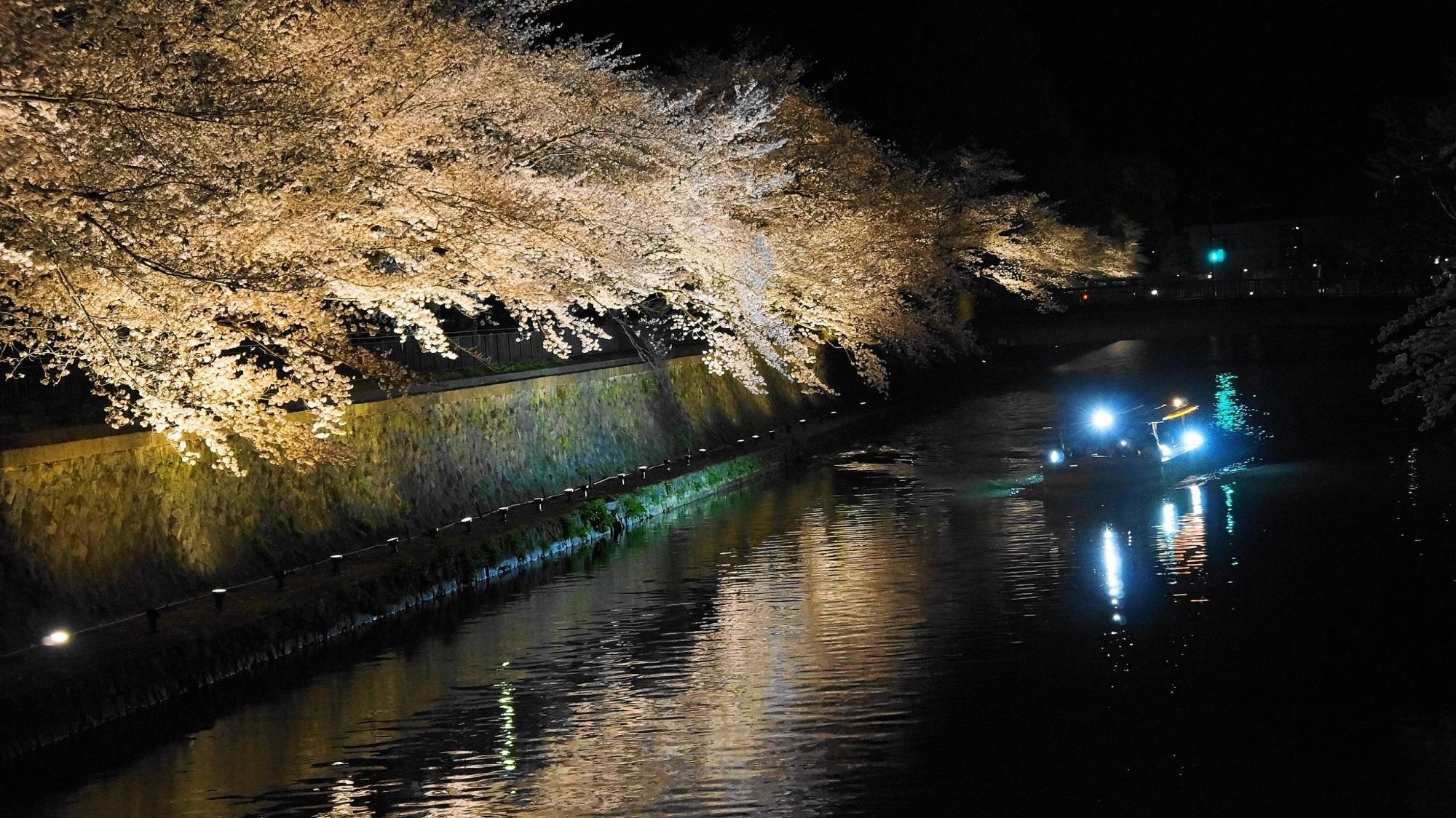 水辺の桜の華やかなライトアップ