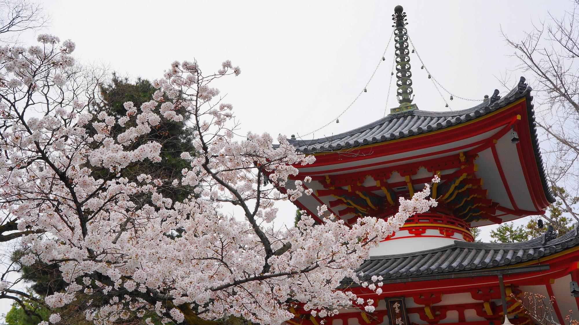 宝塔と見ごろの桜