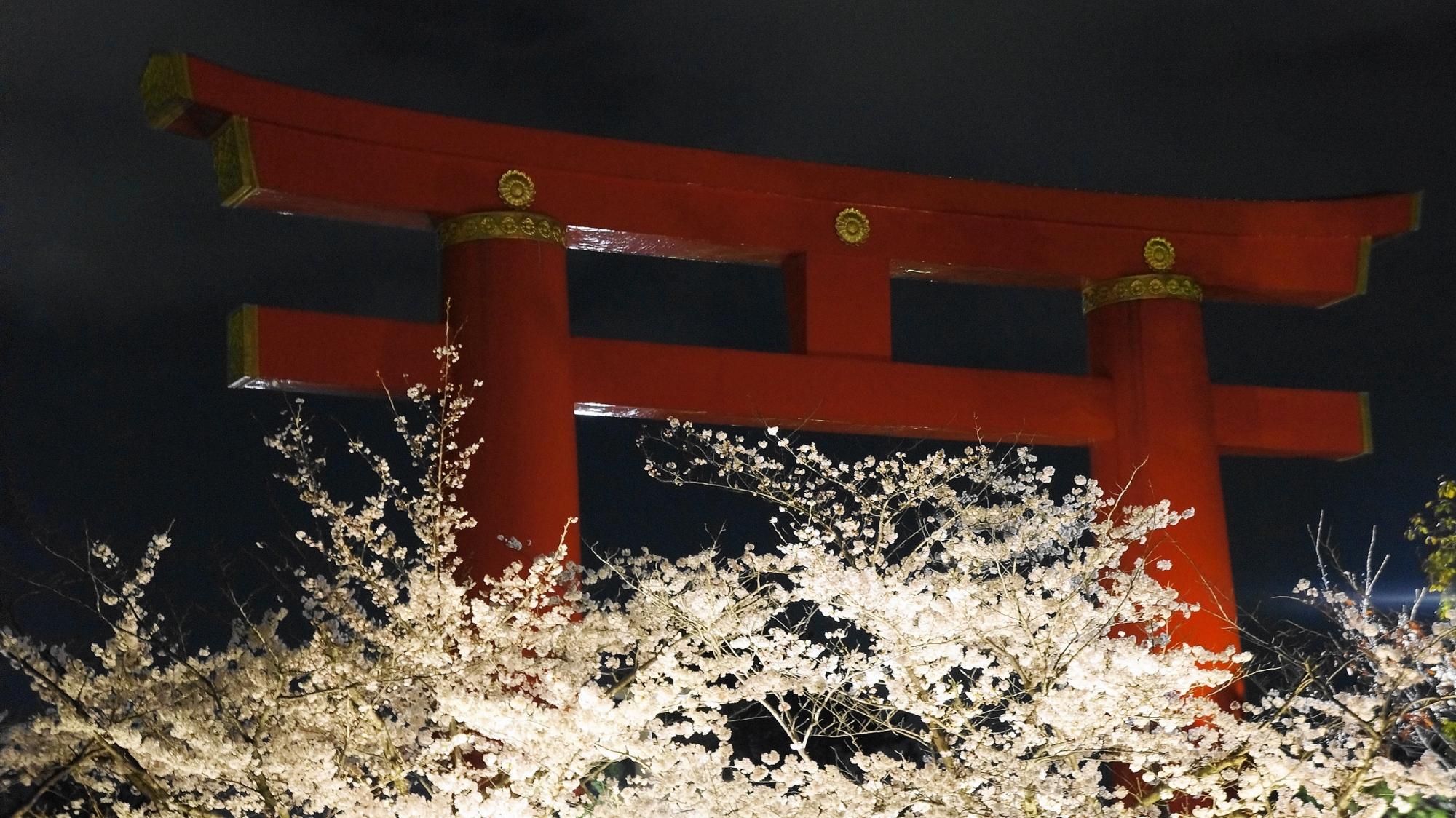 岡崎疏水の平安神宮鳥居と夜桜ライトアップ
