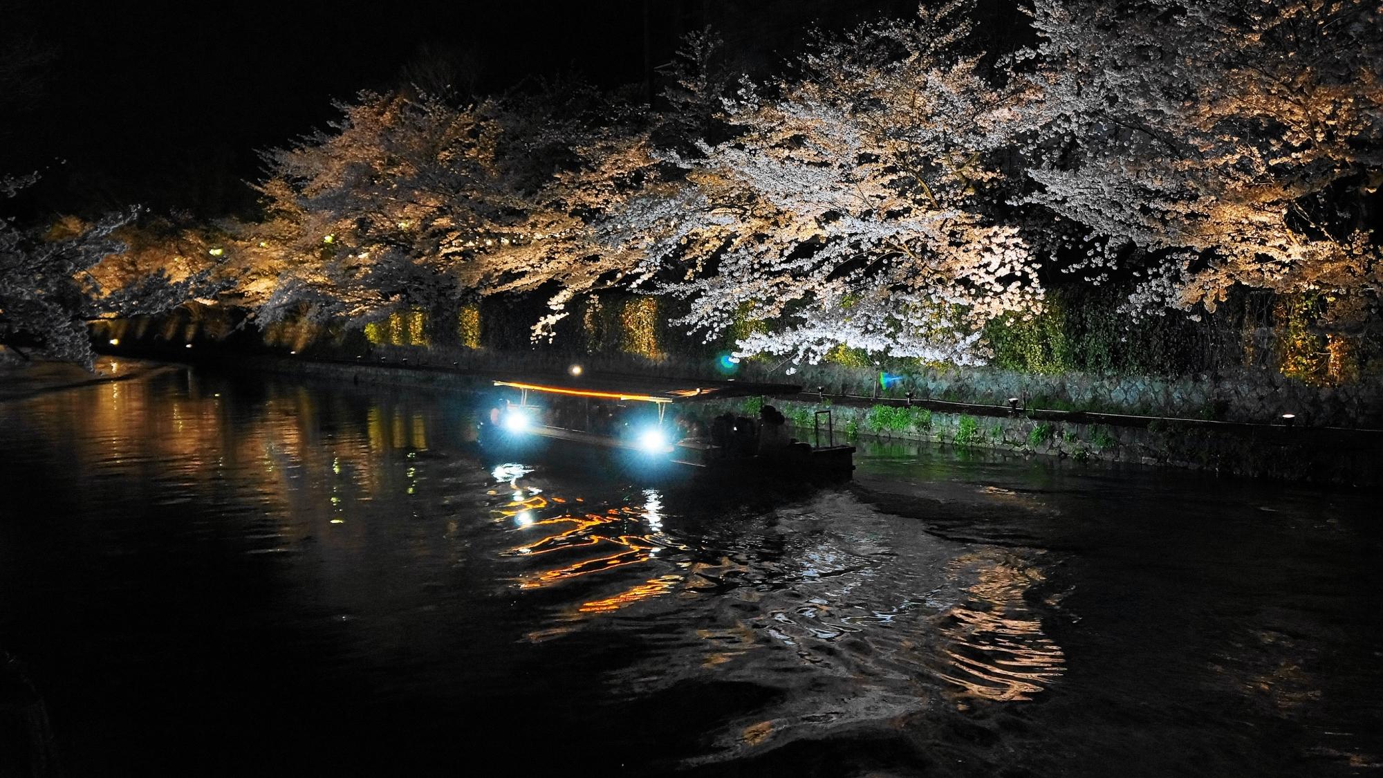 桜の名所の岡崎回廊の十石船と幻想的な夜桜ライトアップ