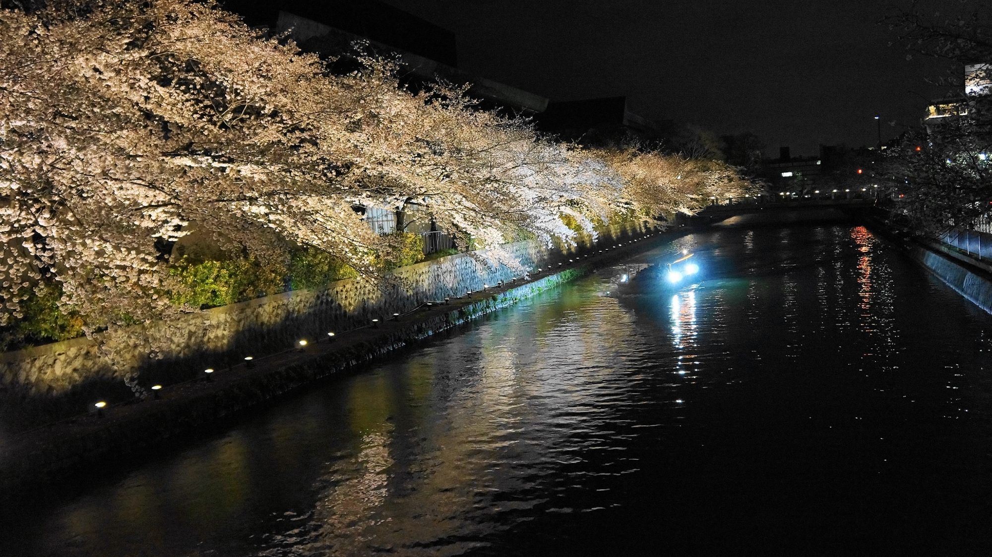 岡崎疏水の見事な夜桜ライトアップ