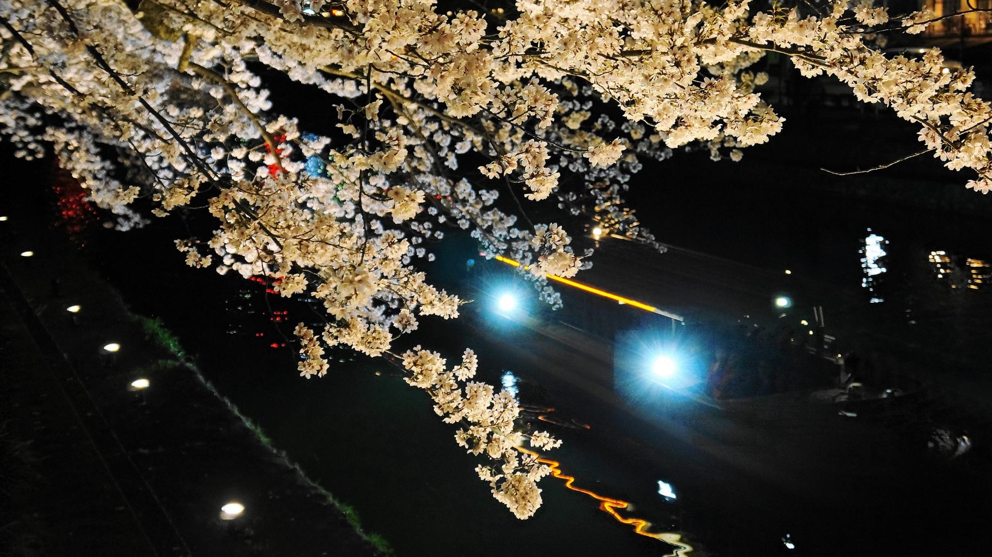 岡崎疏水の鮮やかな桜ライトアップ