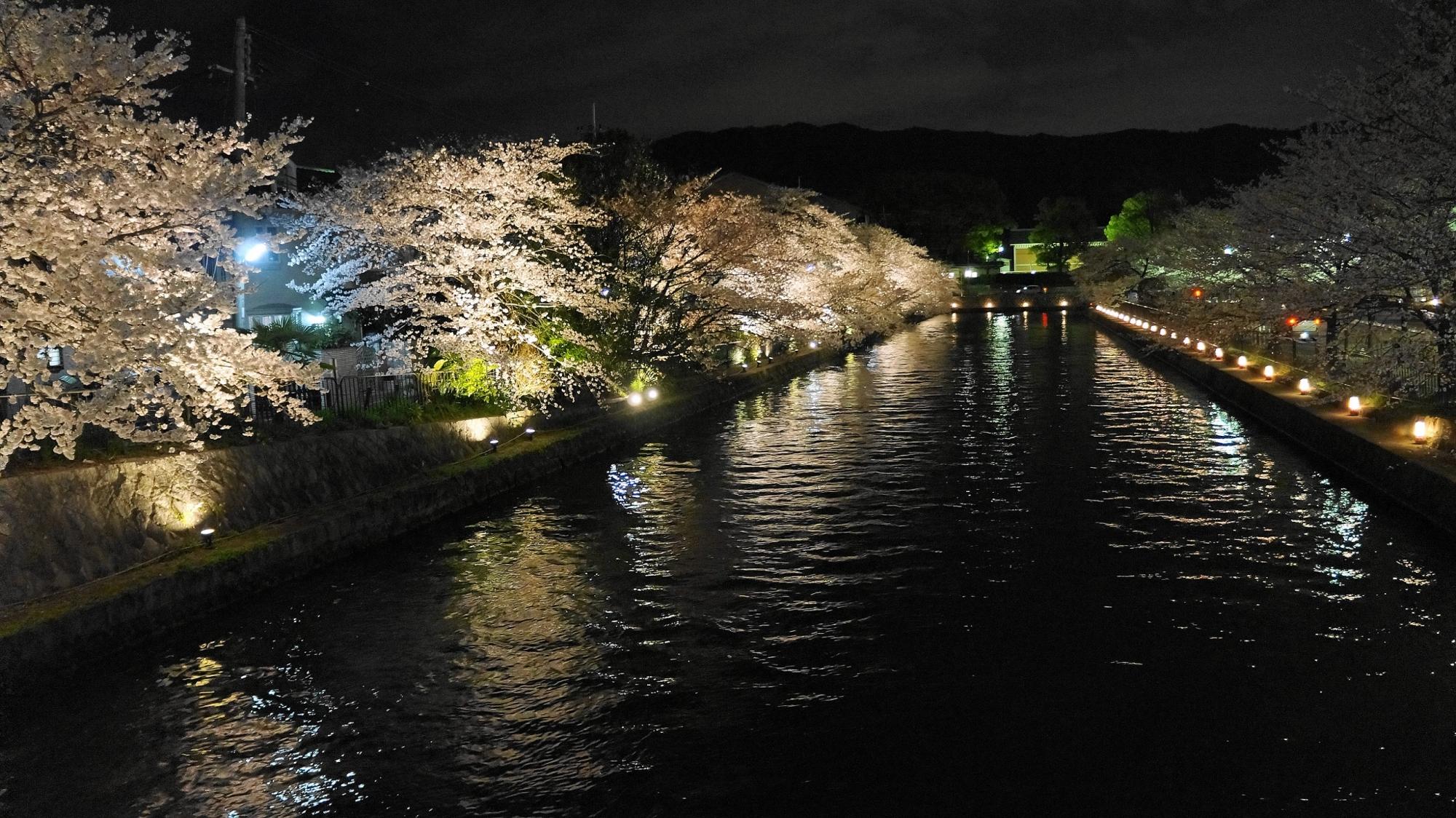 岡崎疏水の夜桜ライトアップ