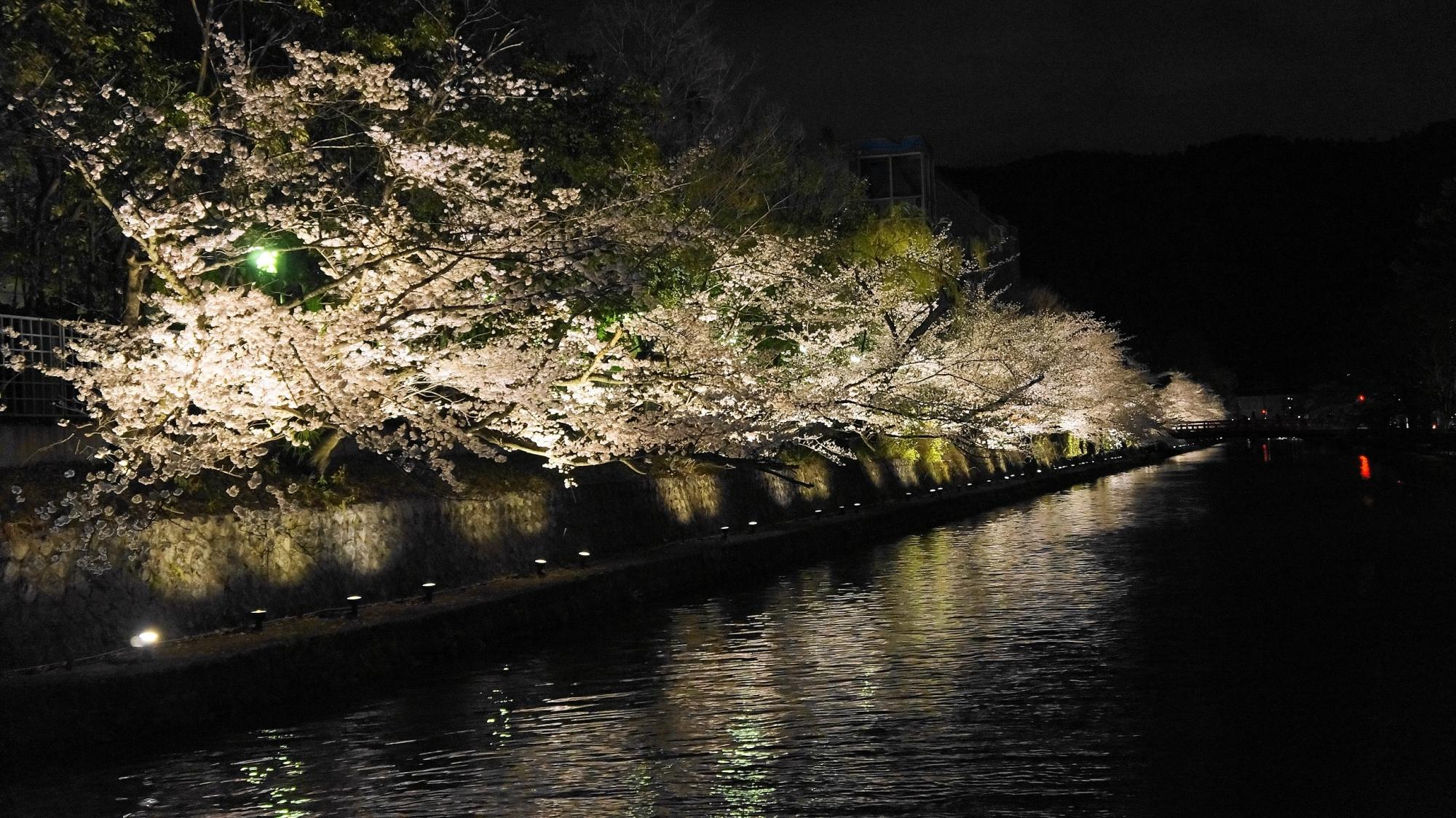 岡崎疏水の満開の桜ライトアップ