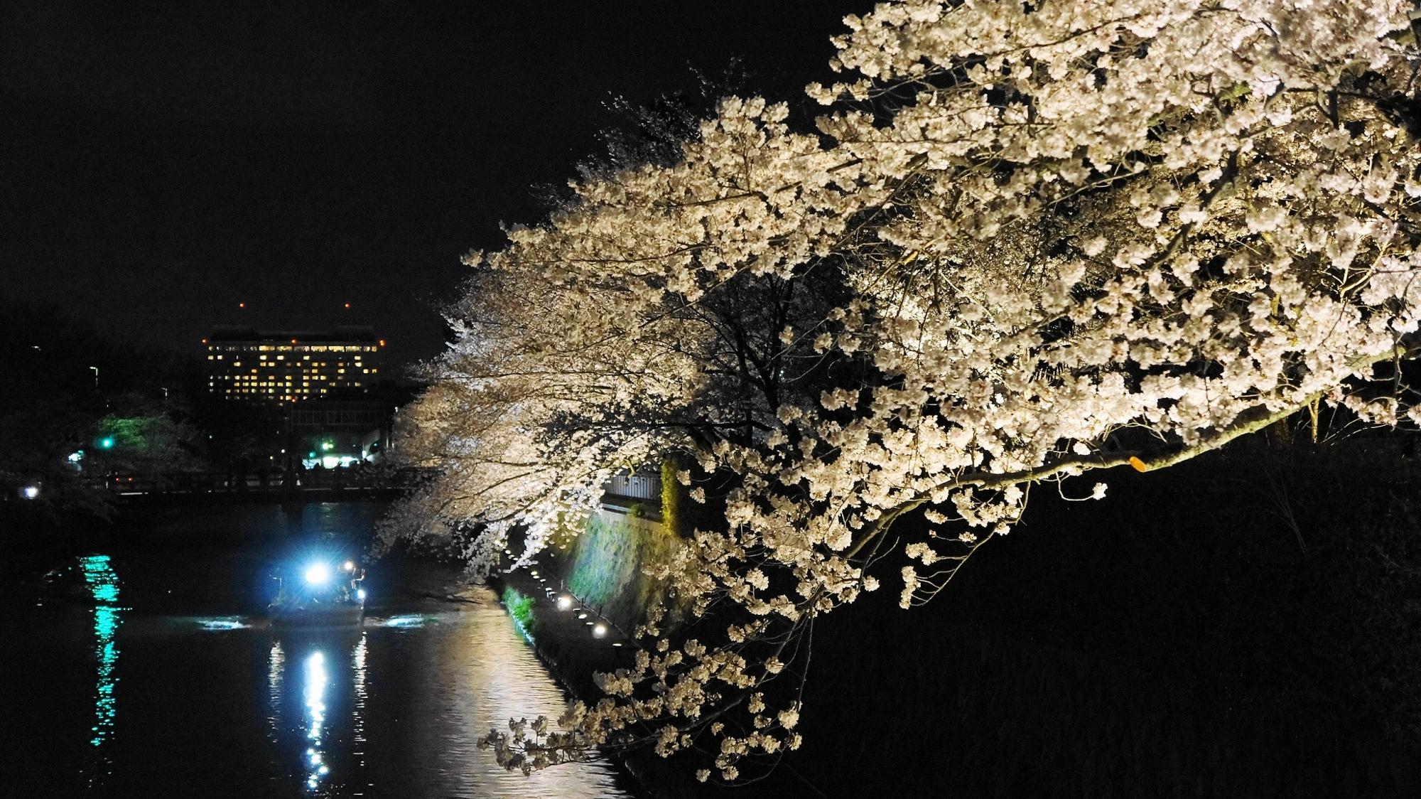 岡崎疏水の十石船と夜桜ライトアップ