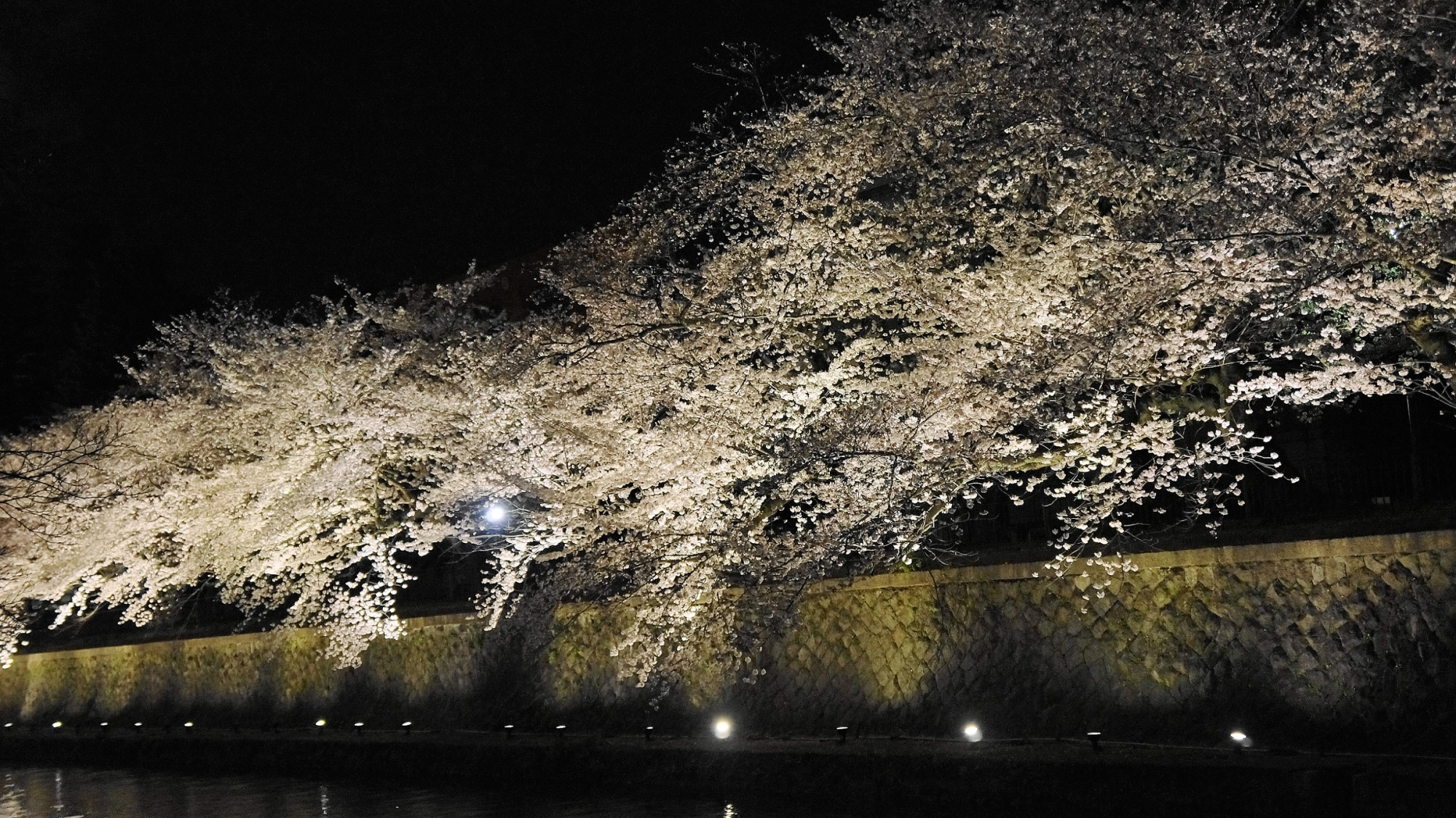 Kyoto Okazaki-Sosui cherry blossoms light up in spring