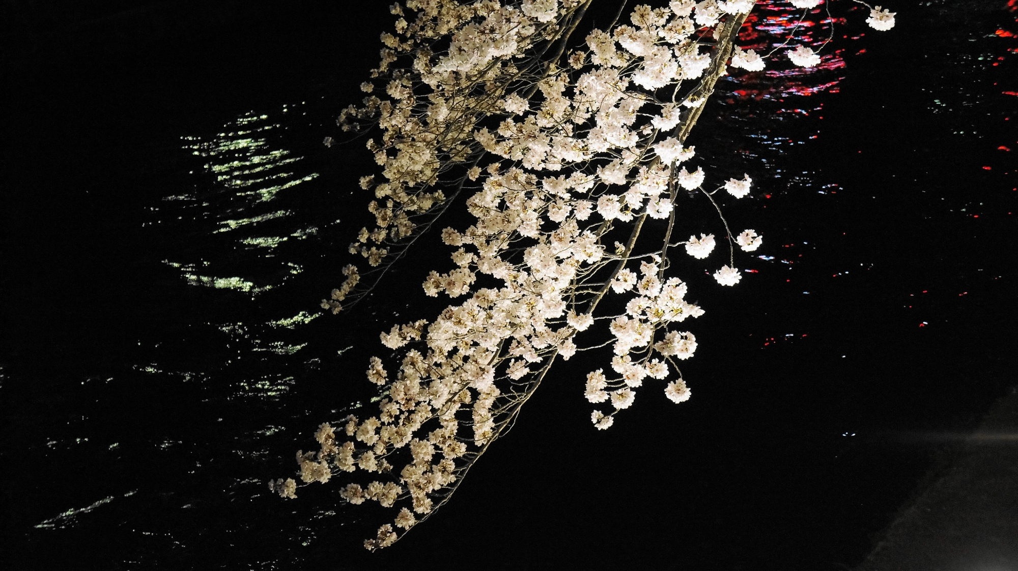 岡崎疏水の美しい桜ライトアップ