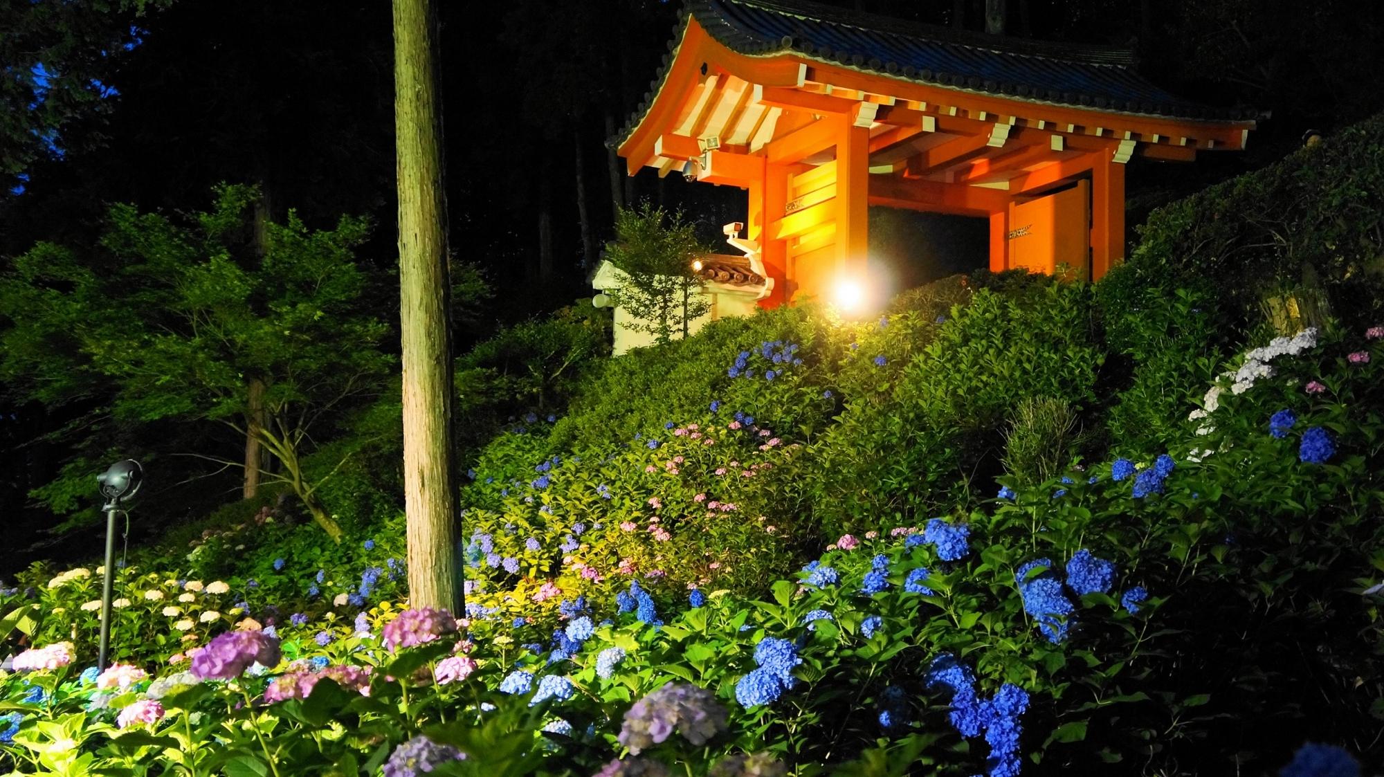 ライトアップされた三室戸寺のあじさい園