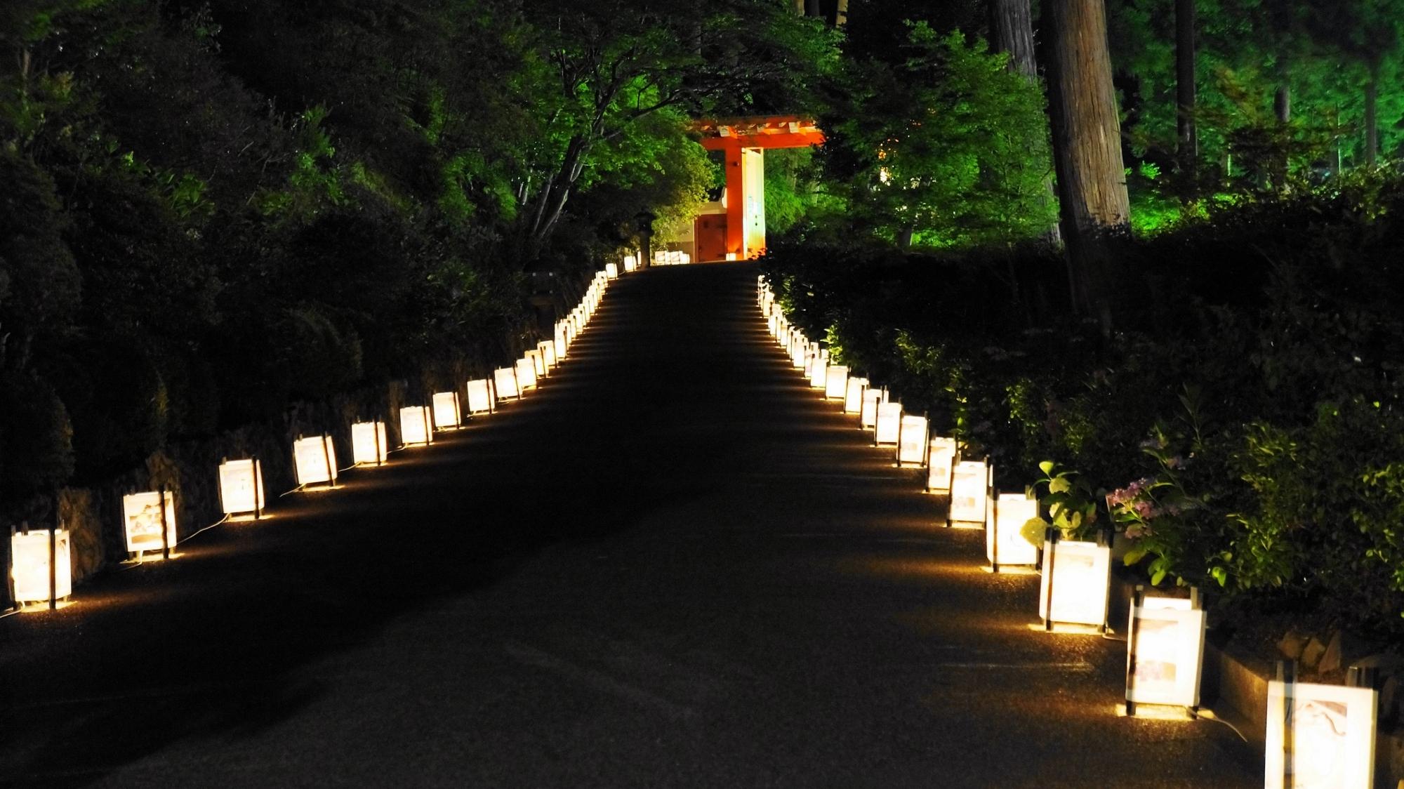 ライトアップされた三室戸寺の山門と参道