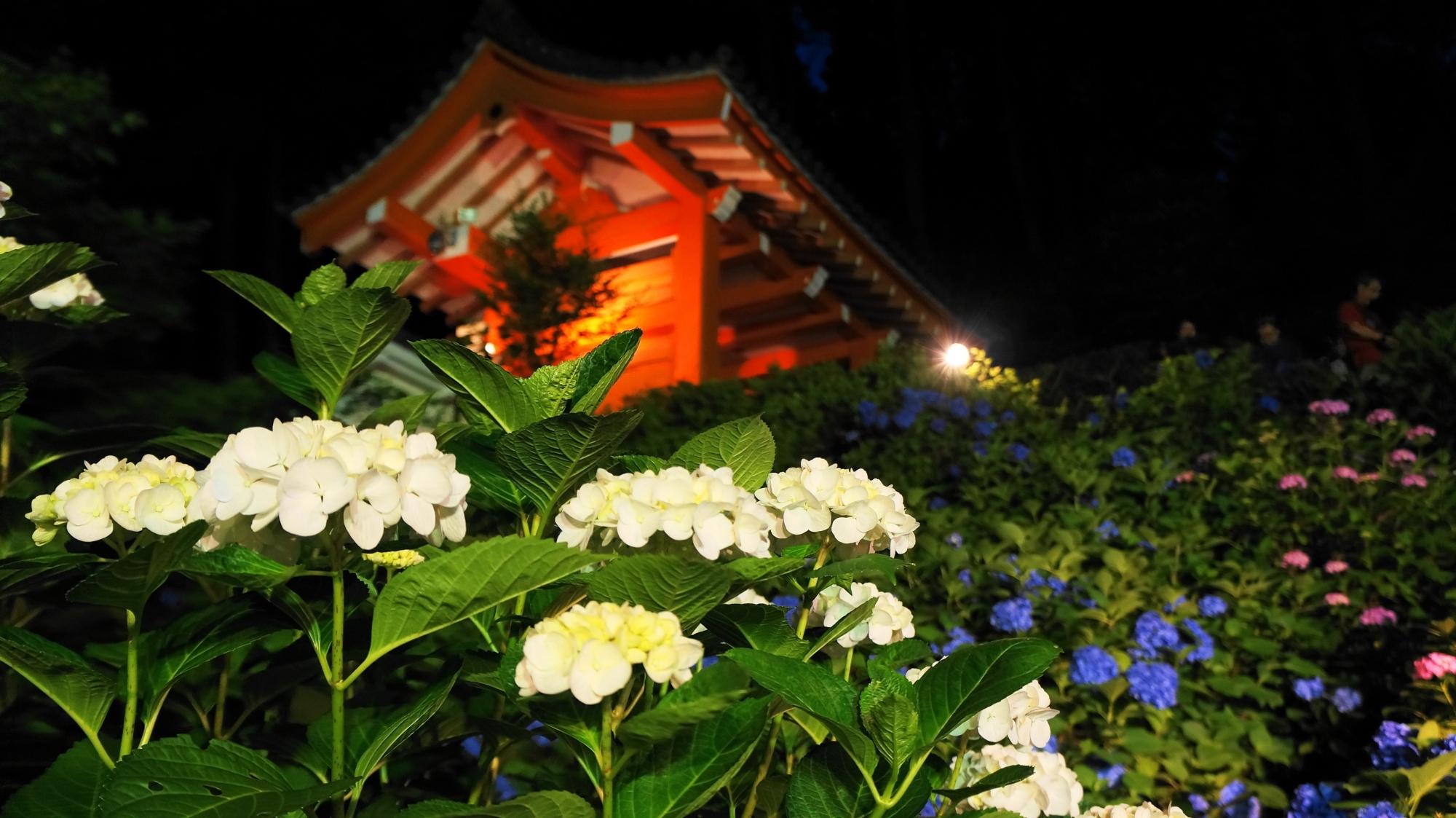 三室戸寺の山門の下で華やぐ夜の紫陽花