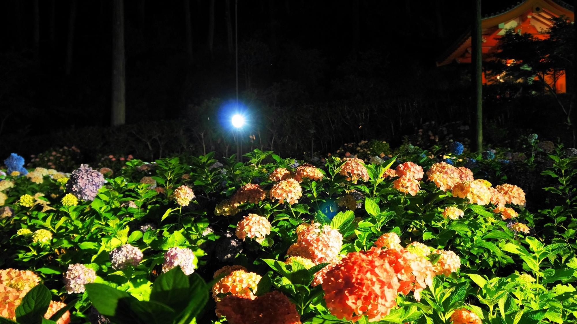 緑の上で揺らめく幻想的な夜の紫陽花