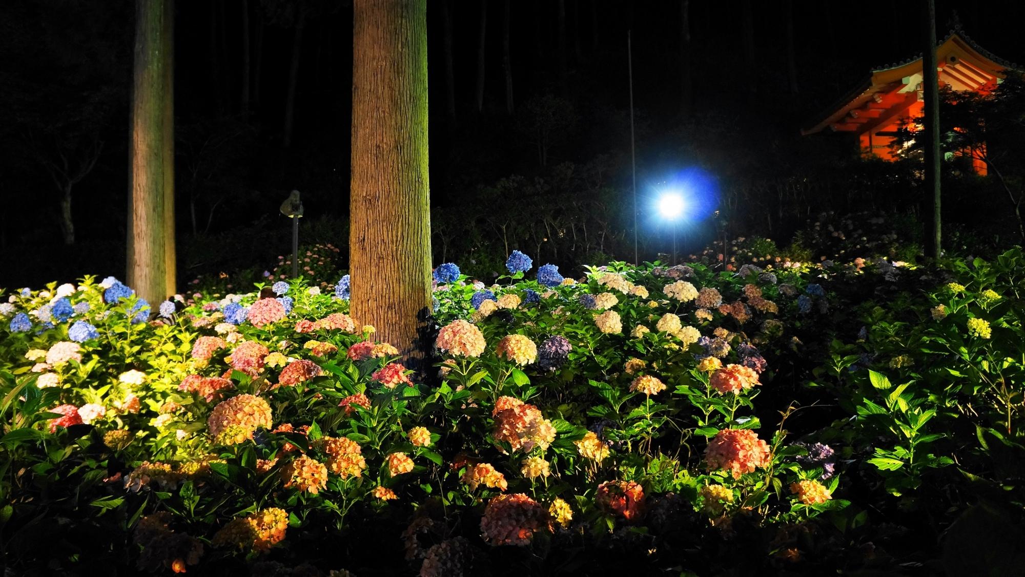 三室戸寺の素晴らしい紫陽花ライトアップと夜の情景