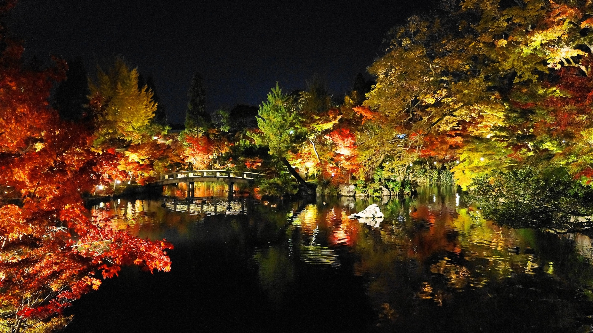 京都のもみじの永観堂の放生池の美しい紅葉ライトアップ