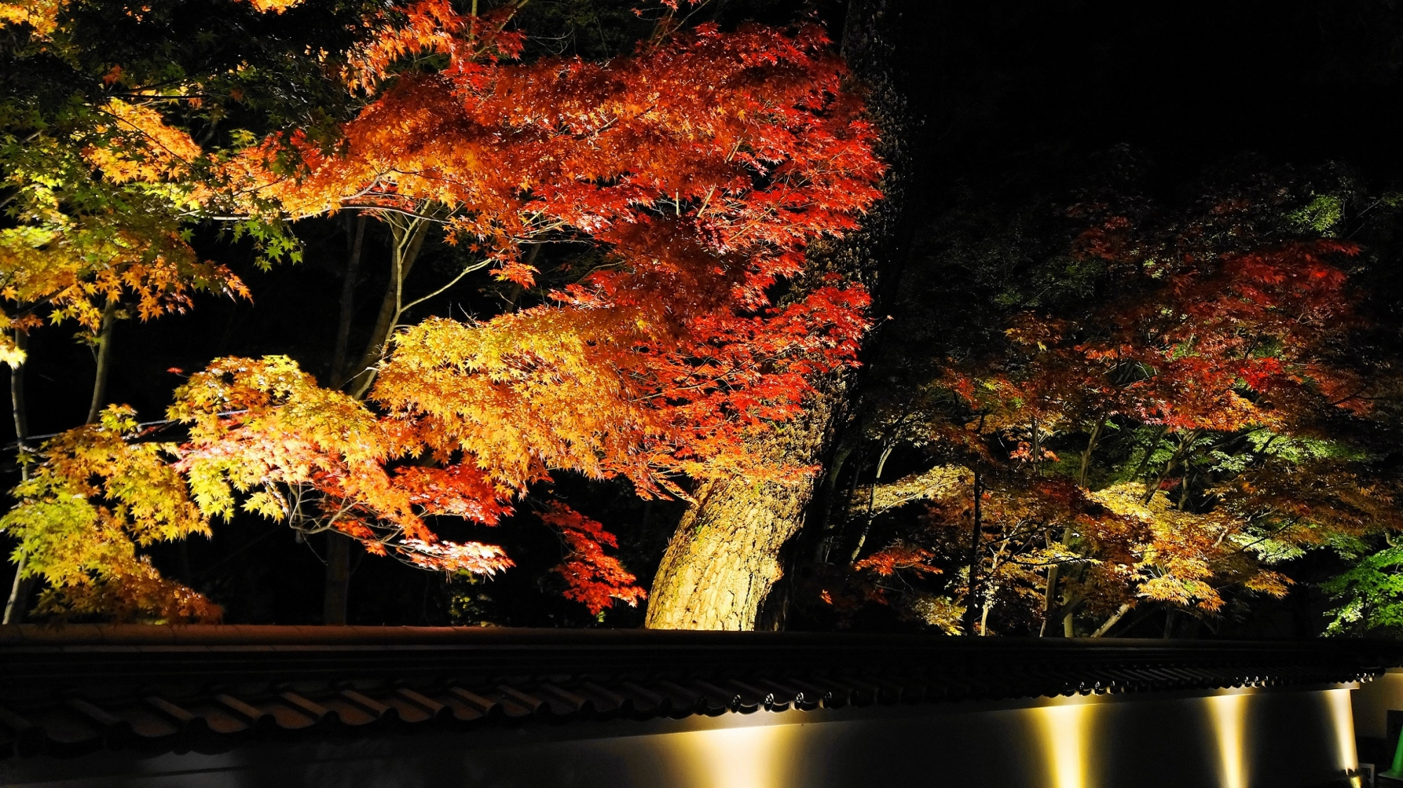 永観堂の総門から中門にかけての紅葉ライトアップ