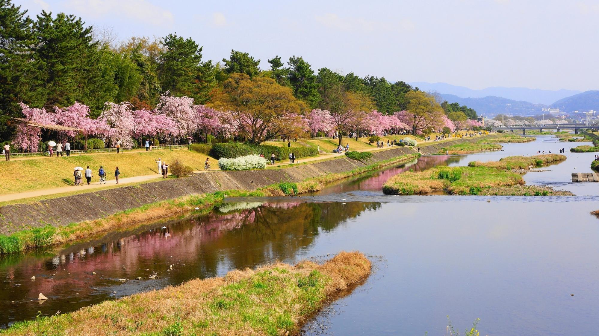 川面にほんのりと映るピンクの桜
