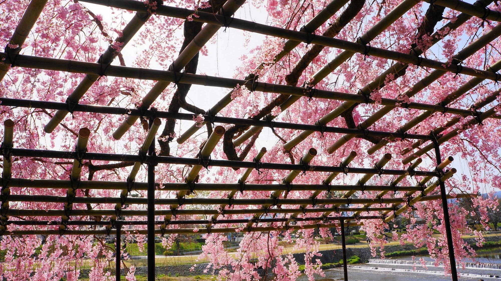 見事な春色につつまれた空間
