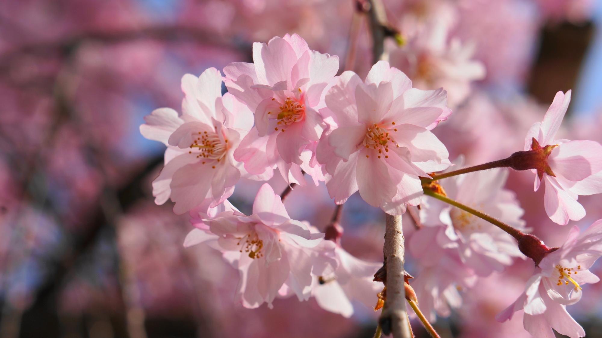 繊細で可愛い一つ一つの花