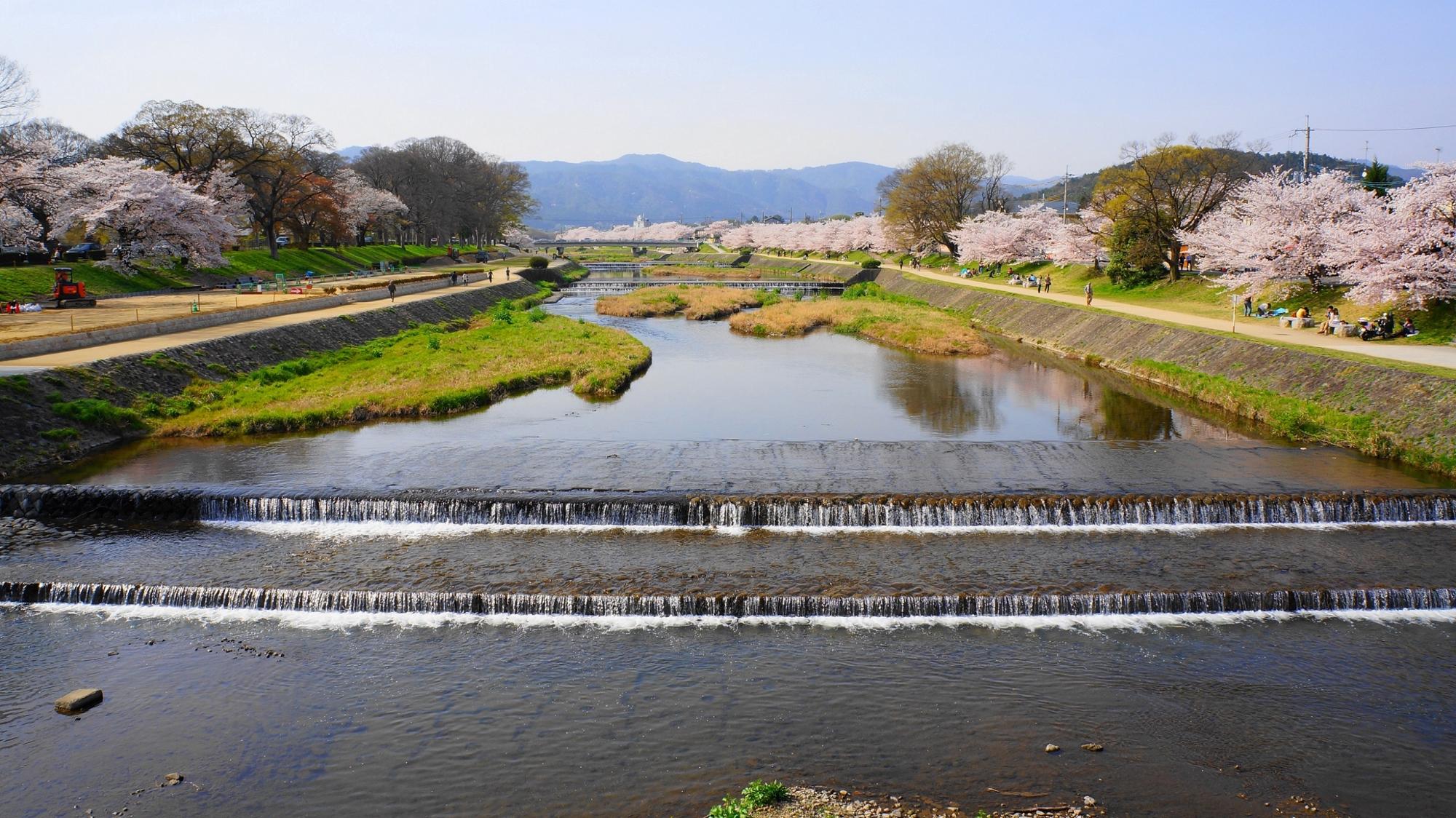 北山大橋から眺めた北方面(上流方面)の桜の咲く賀茂川