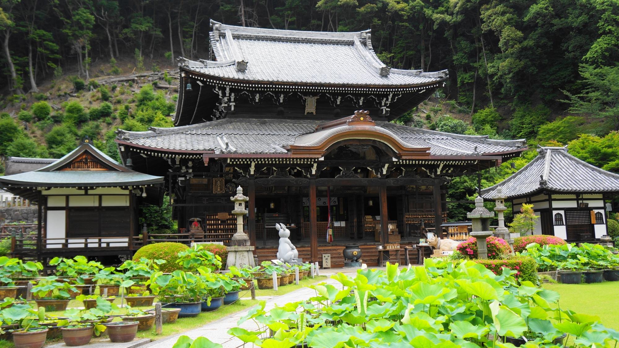 前の庭には蓮がたくさんある三室戸寺の本堂