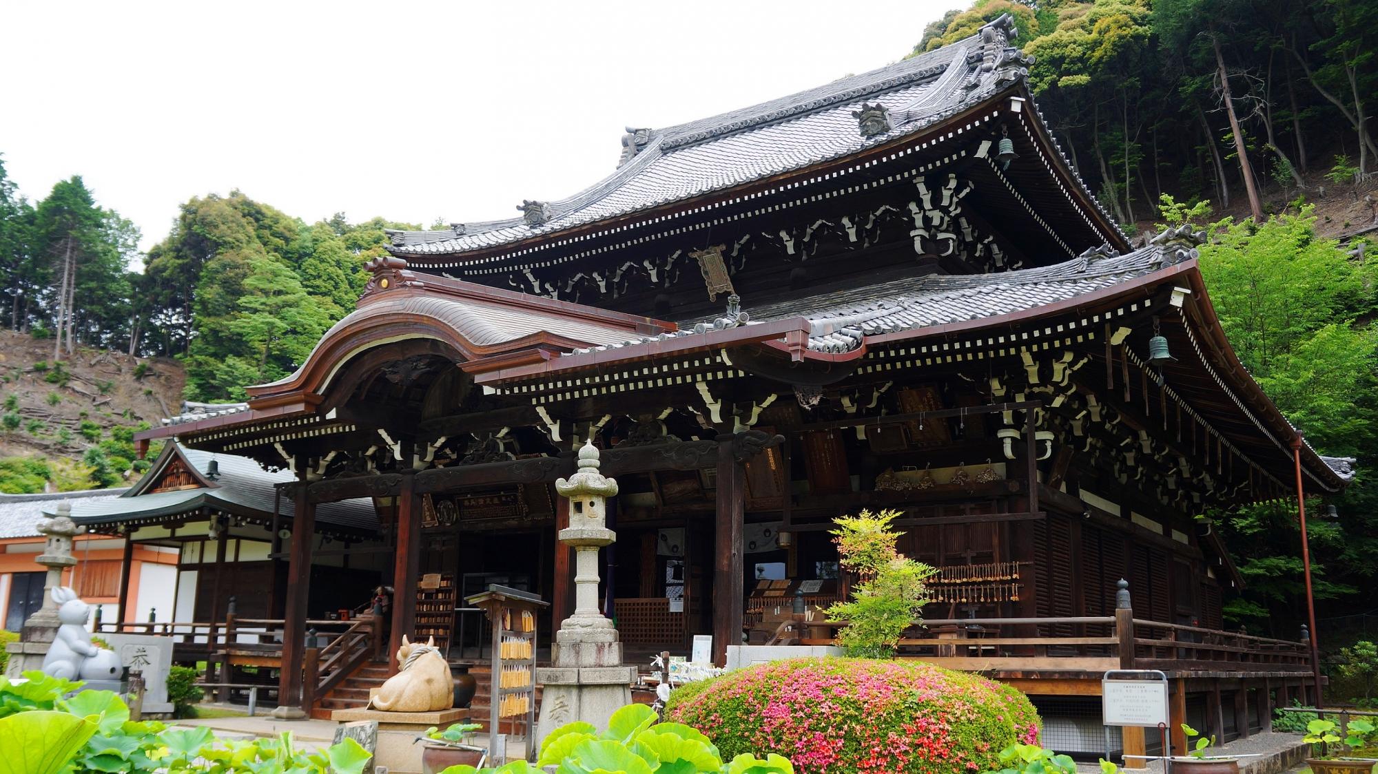 三室戸寺の本堂と残るサツキの花