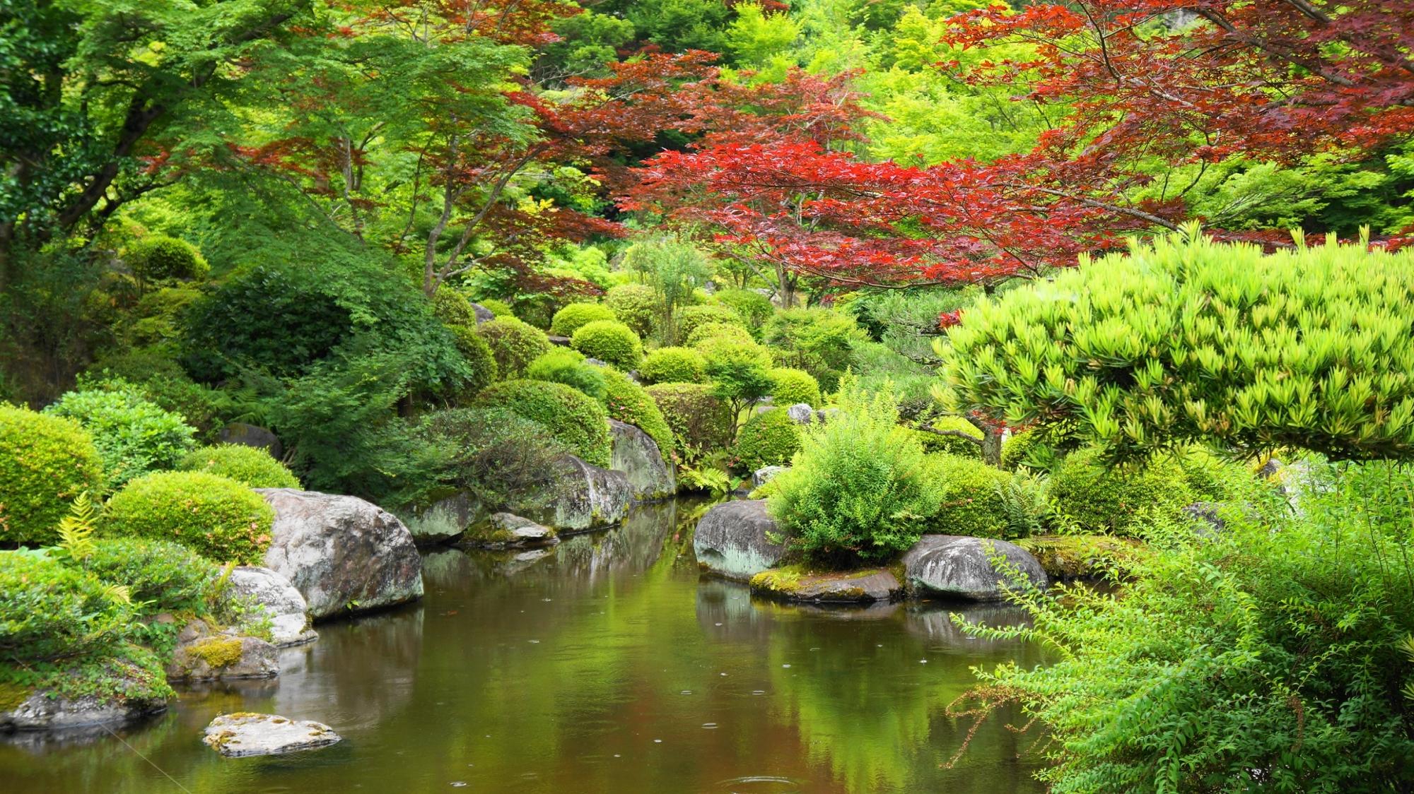 多種多様な木々が植えられる三室戸寺の池泉式庭園