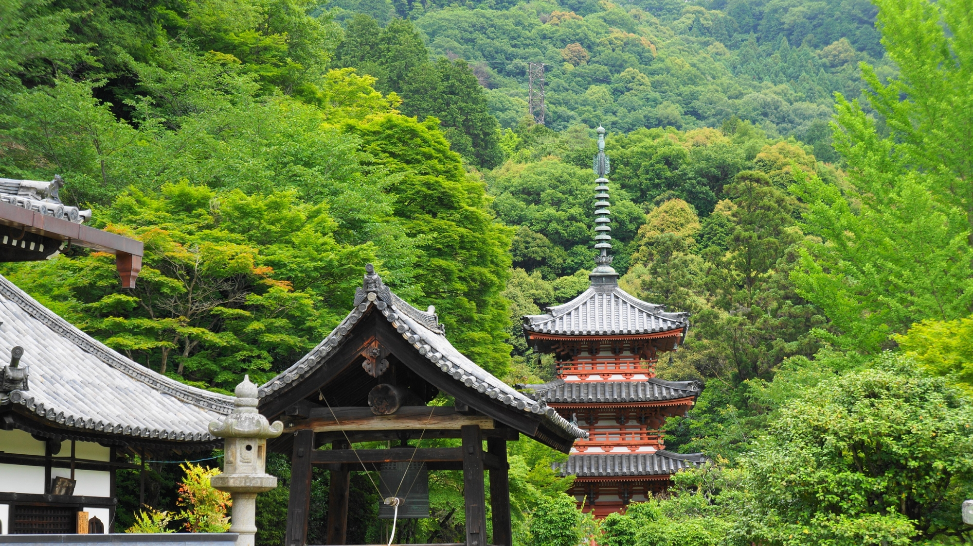 深い緑の中に佇む三室戸寺の鐘楼と朱色の三重塔