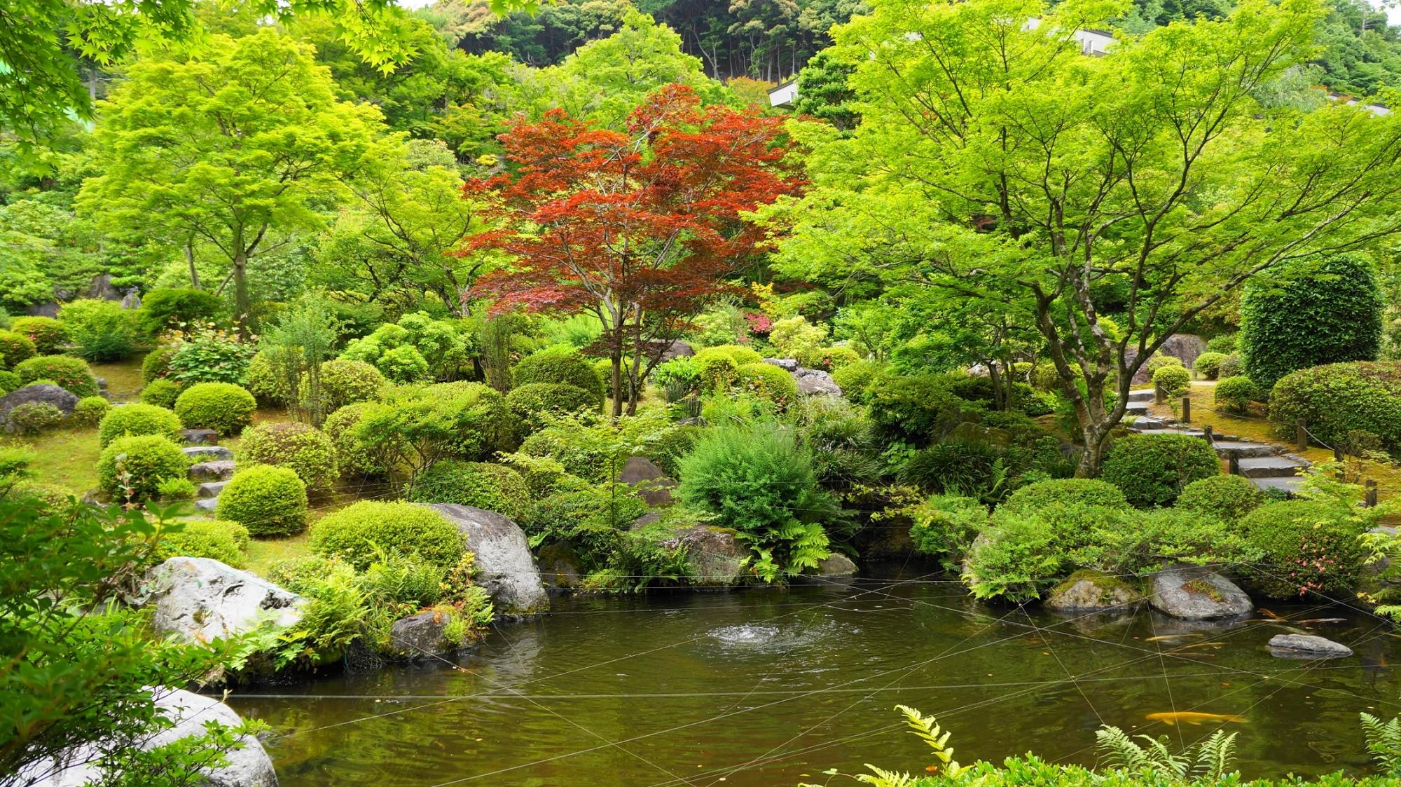 緑溢れる美しい水辺の景色の三室戸寺の池泉回遊式庭園