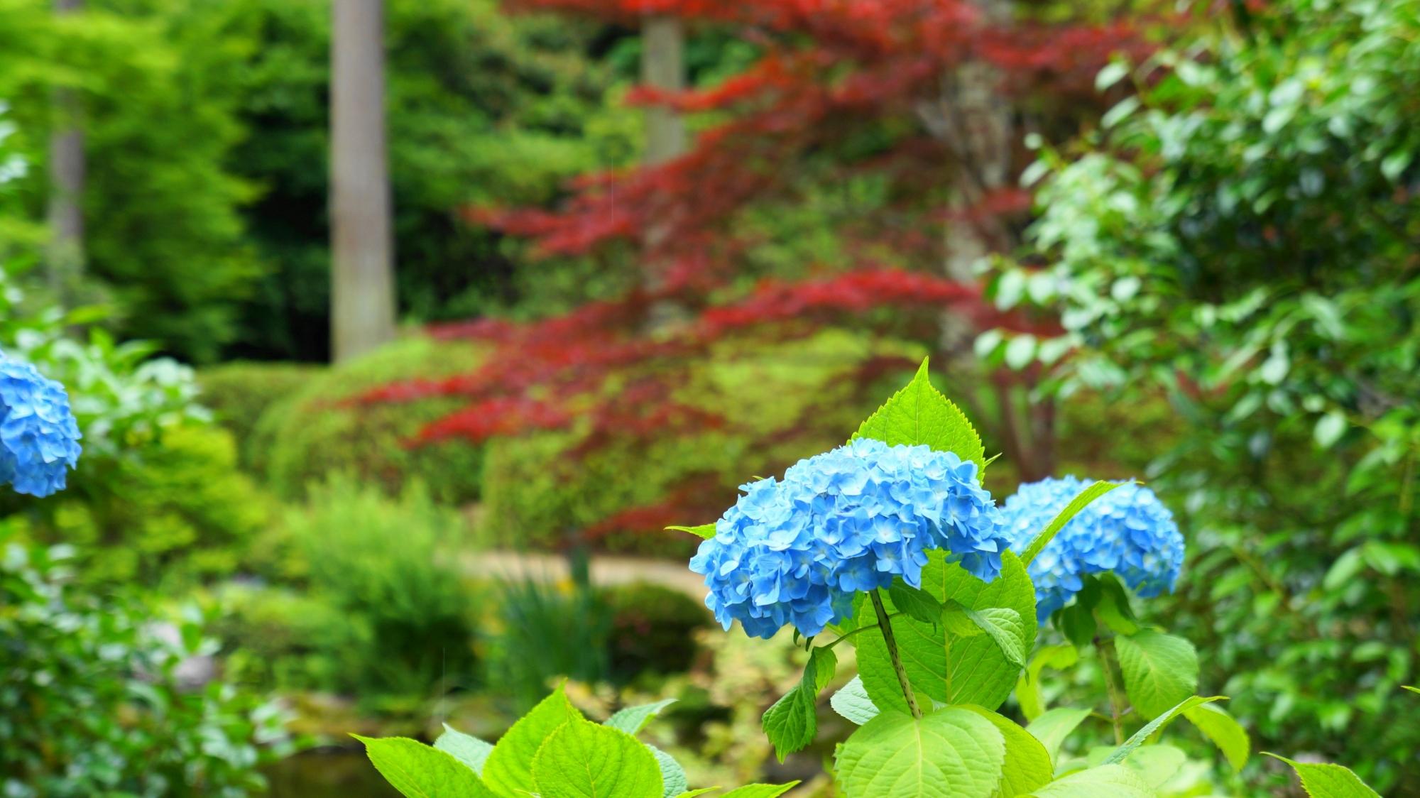 水辺を華やかに彩る池泉式庭園の紫陽花