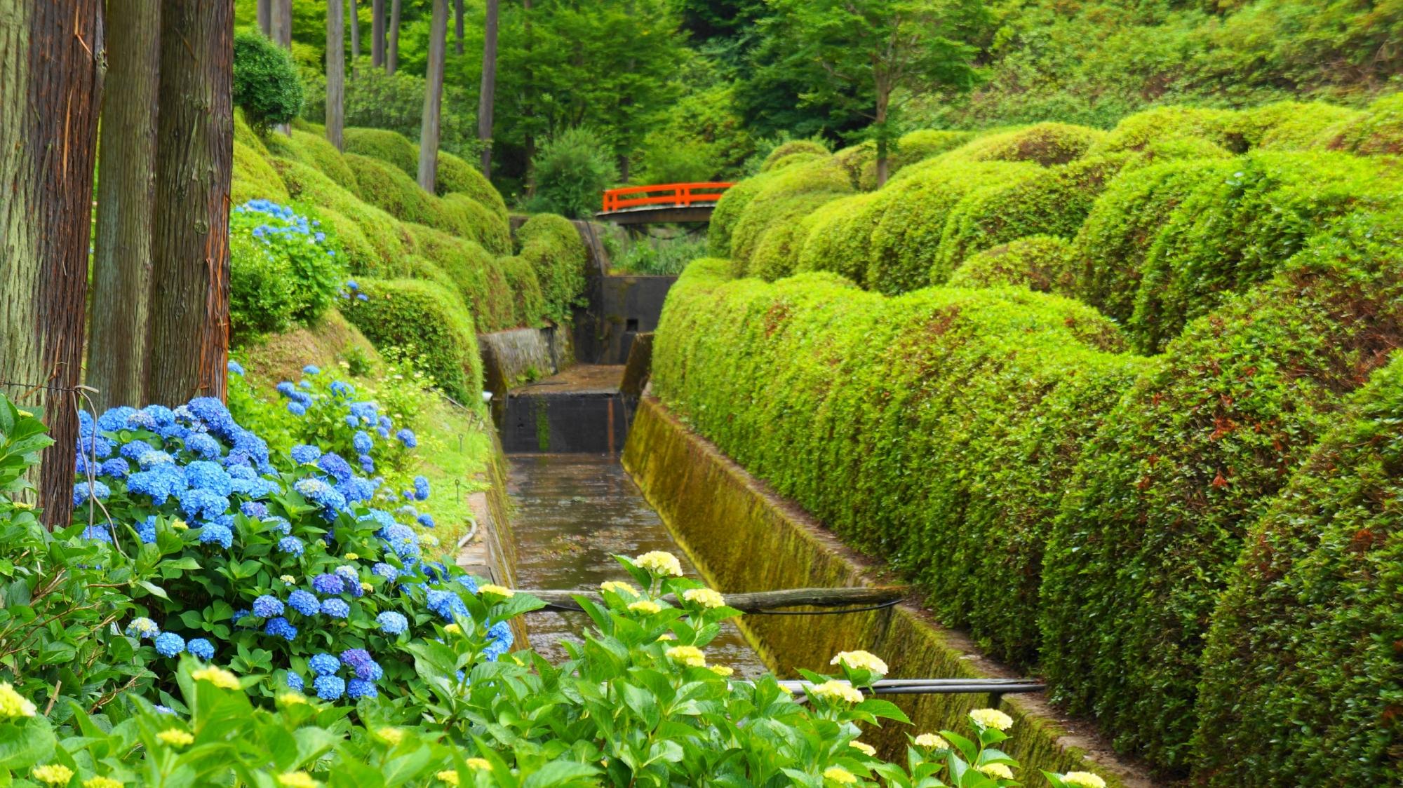 三室戸寺のつつじ園付近の水辺を彩る華やかな紫陽花