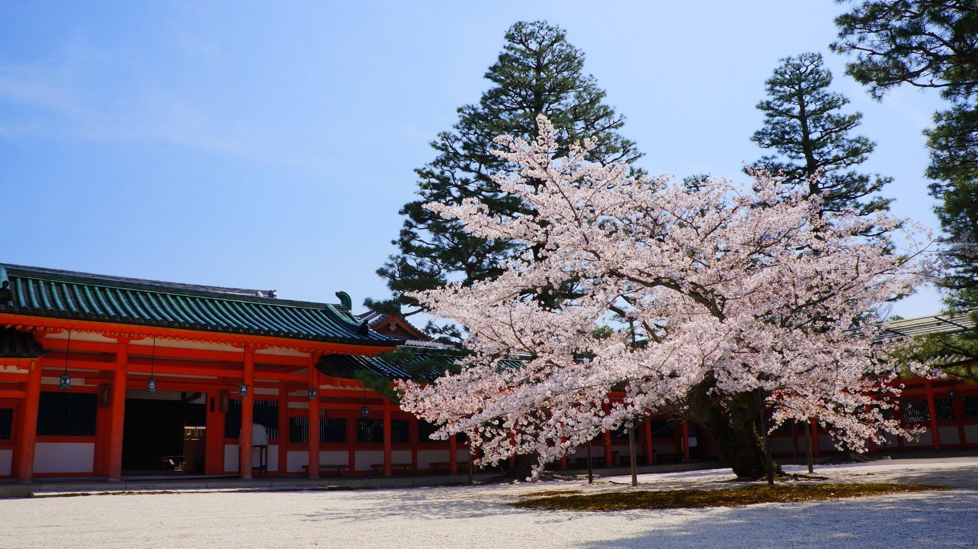 雅で華やかな桜の名所