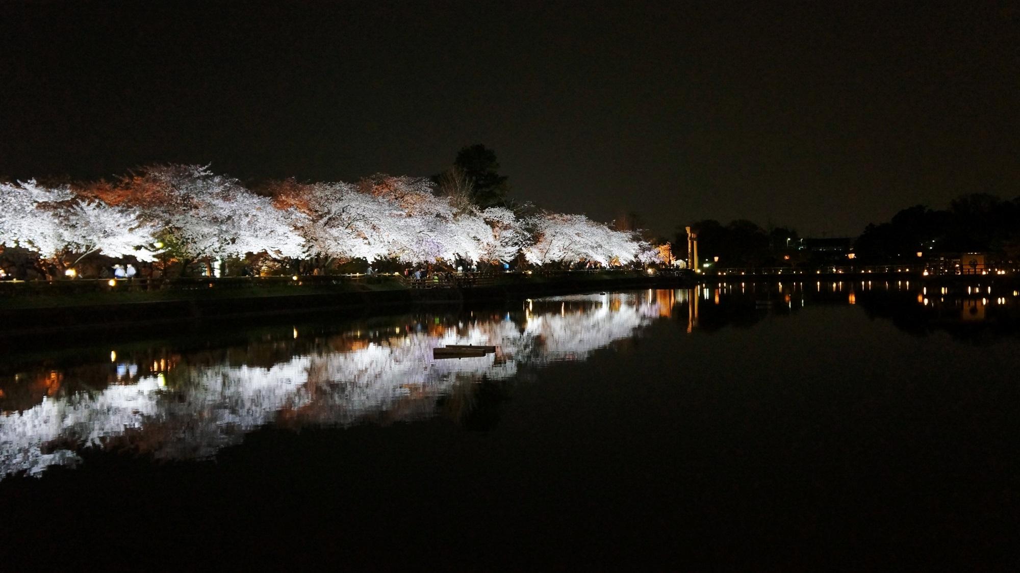 長岡天満宮 桜 ライトアップ 幻想的な夜桜と水鏡