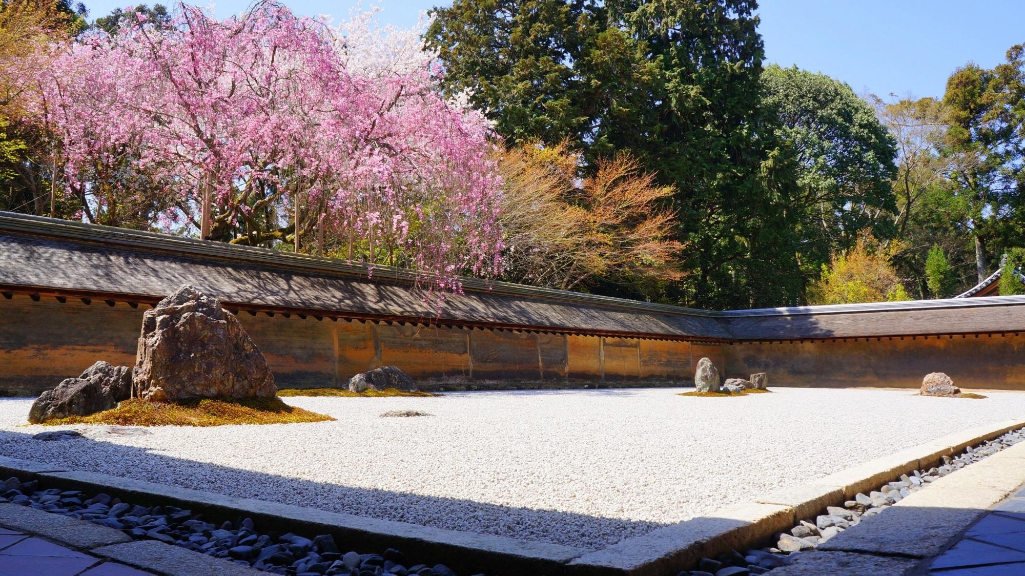 「龍安寺 桜」の画像検索結果
