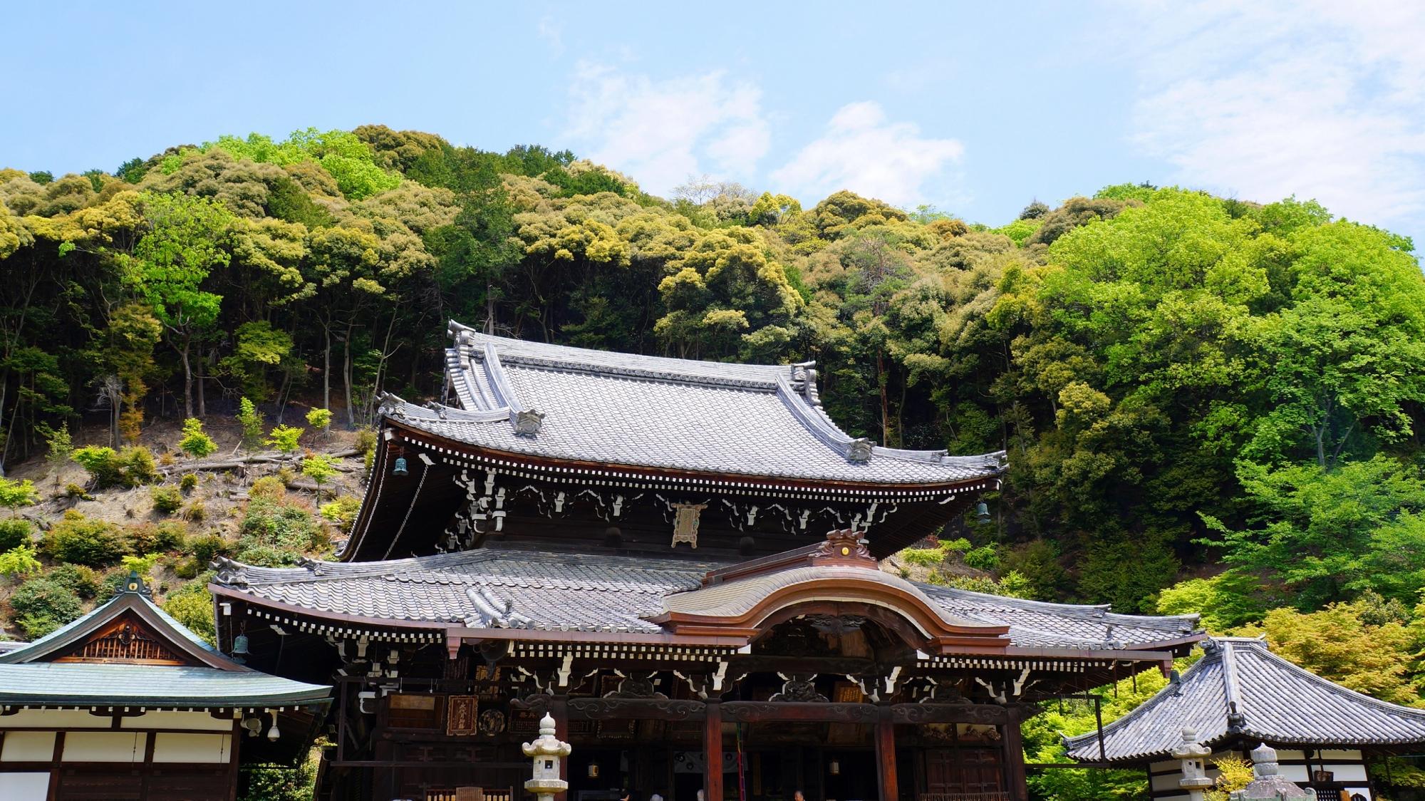 山を背景にして雄大に構える三室戸寺の本堂