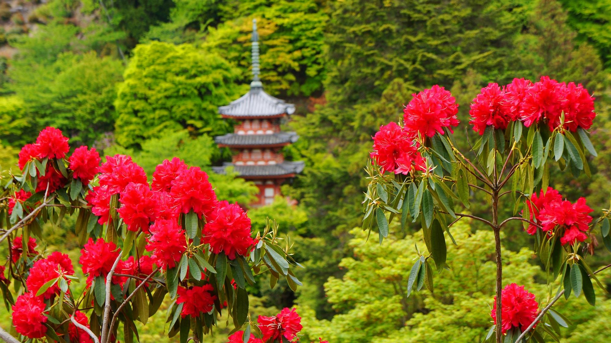 三重塔を背景にした絵になる春の風景