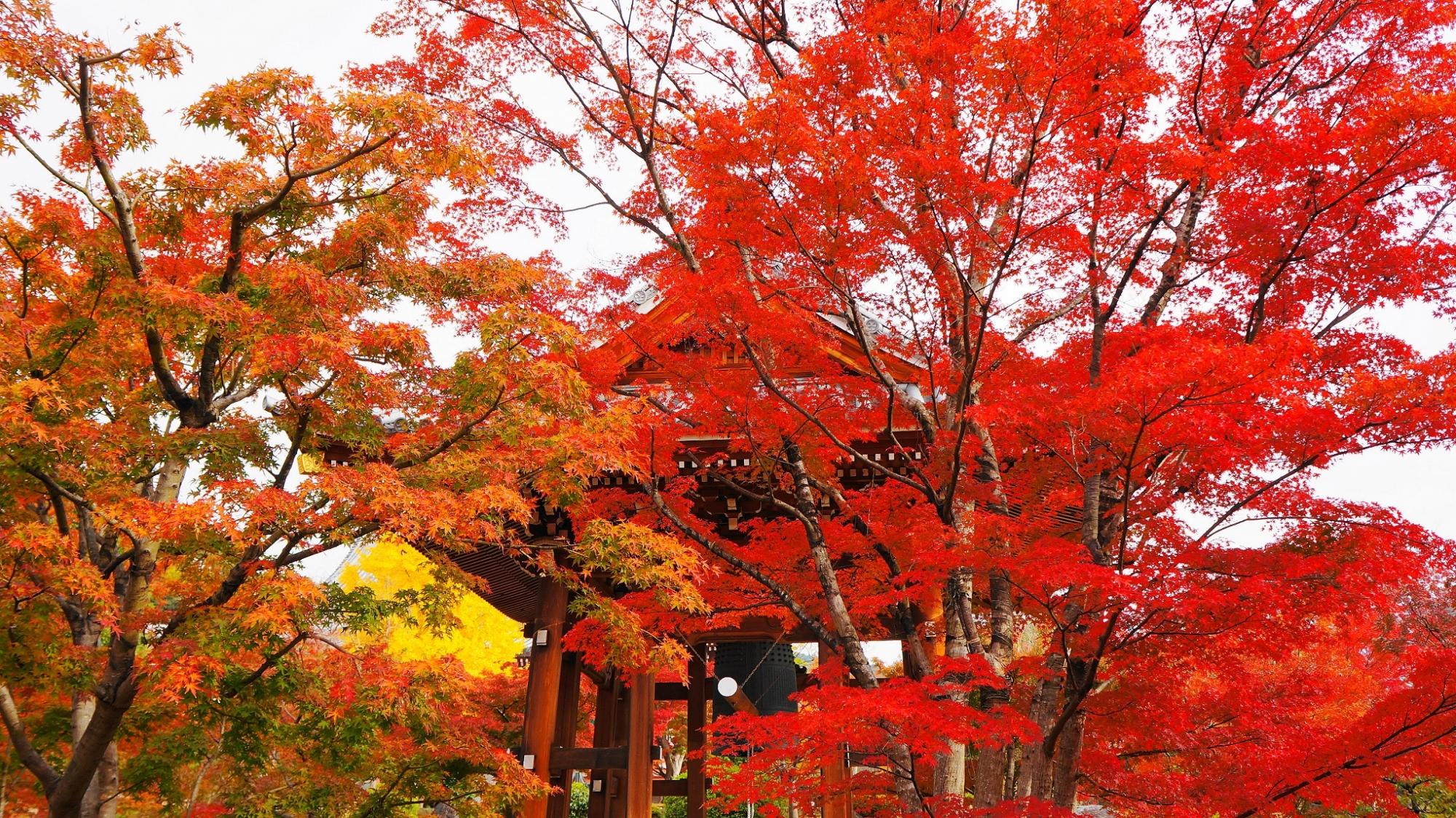 見事な秋色に染まる鐘楼と境内