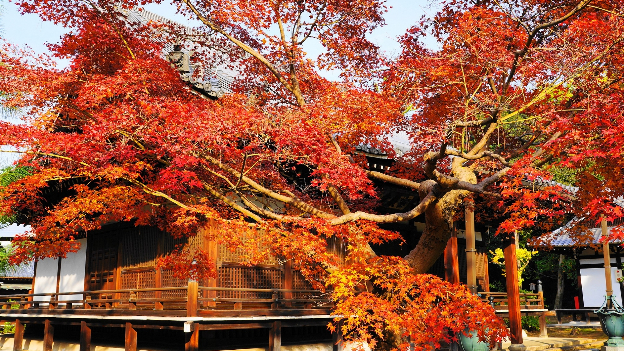 智積院の密厳堂と紅葉