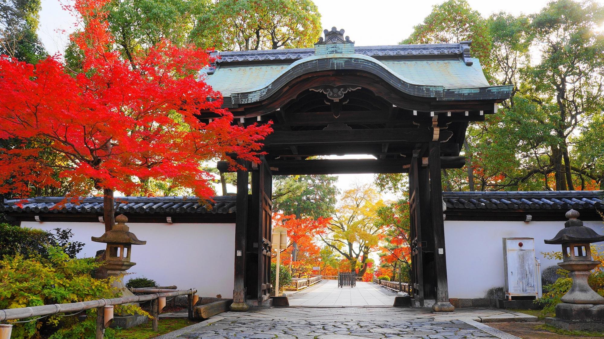 智積院の唐門と紅葉の絵になる情景