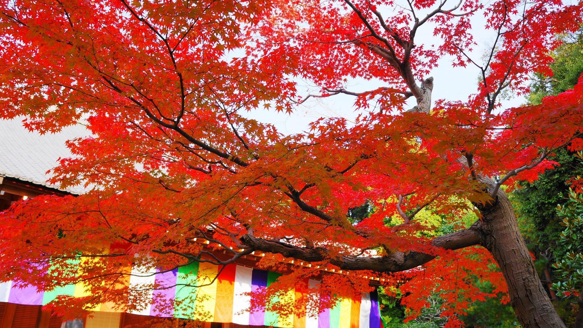 智積院の講堂と仏旗を彩る紅葉
